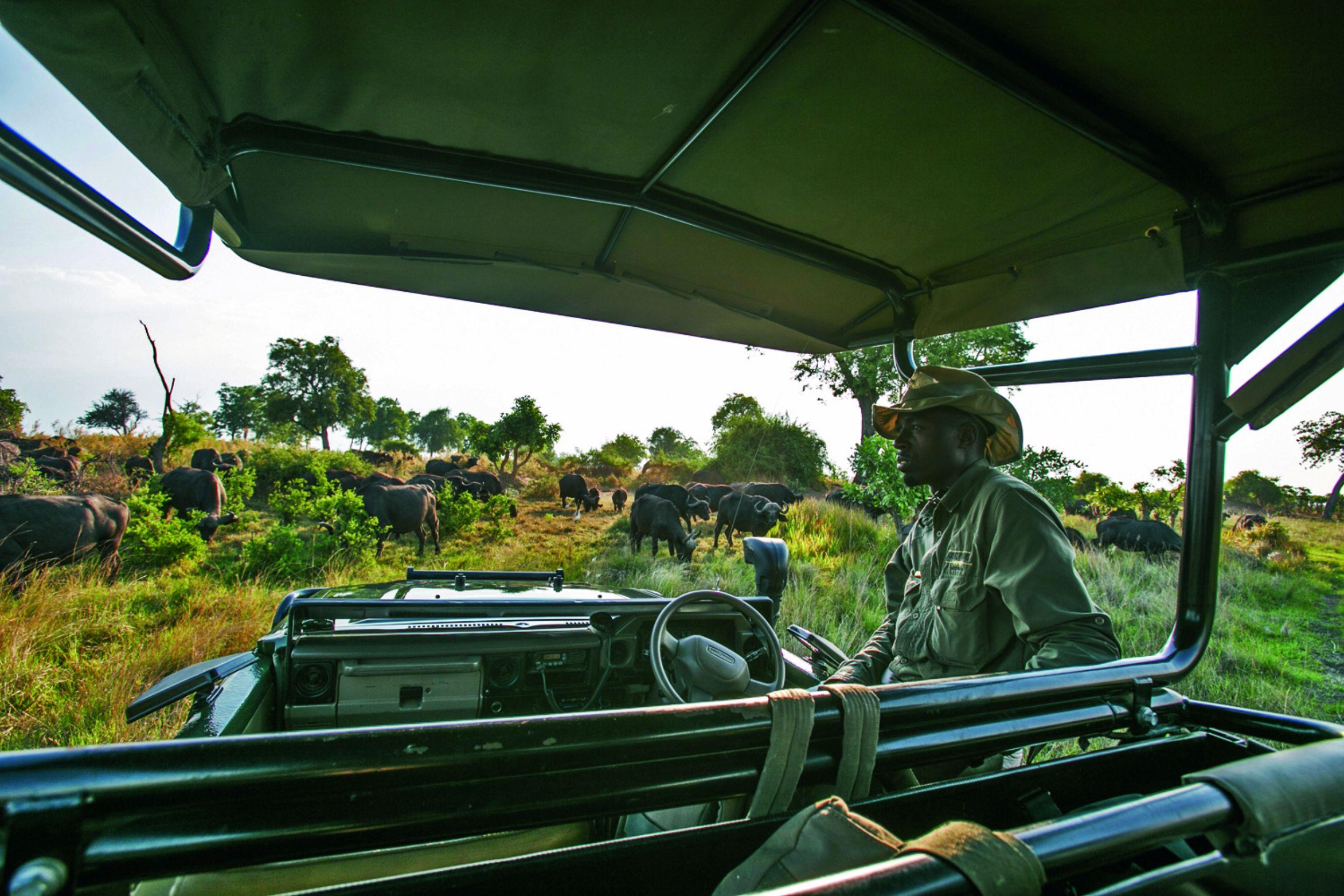_Copyright_Beverly_Joubert_Duba_Safari_Botswana_3979.jpg