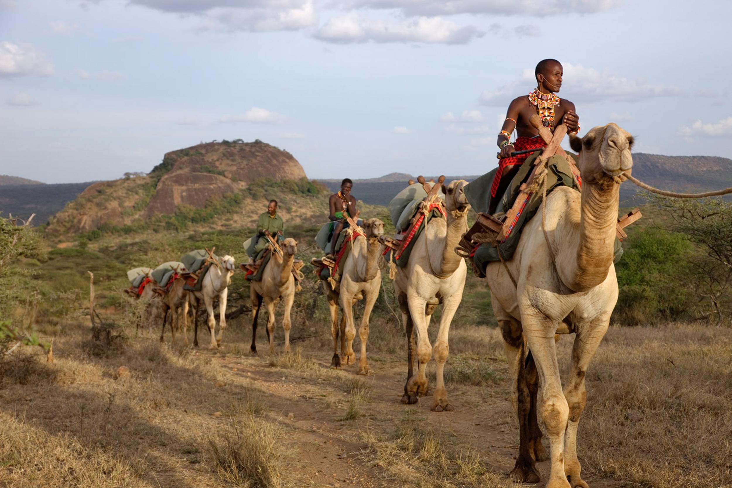 Ol-Malo_camels.jpg