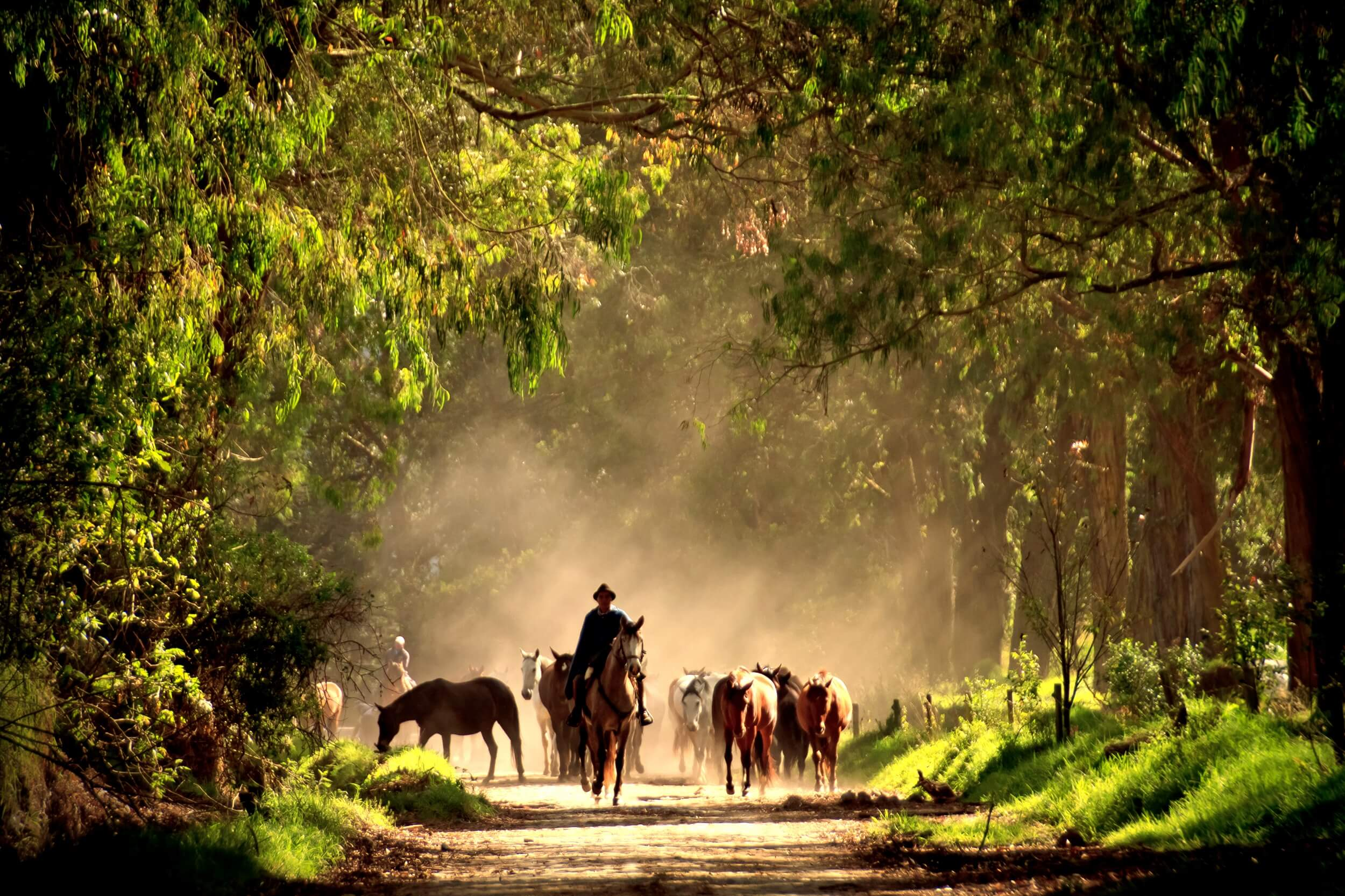 Horses Zuleta (4).jpg