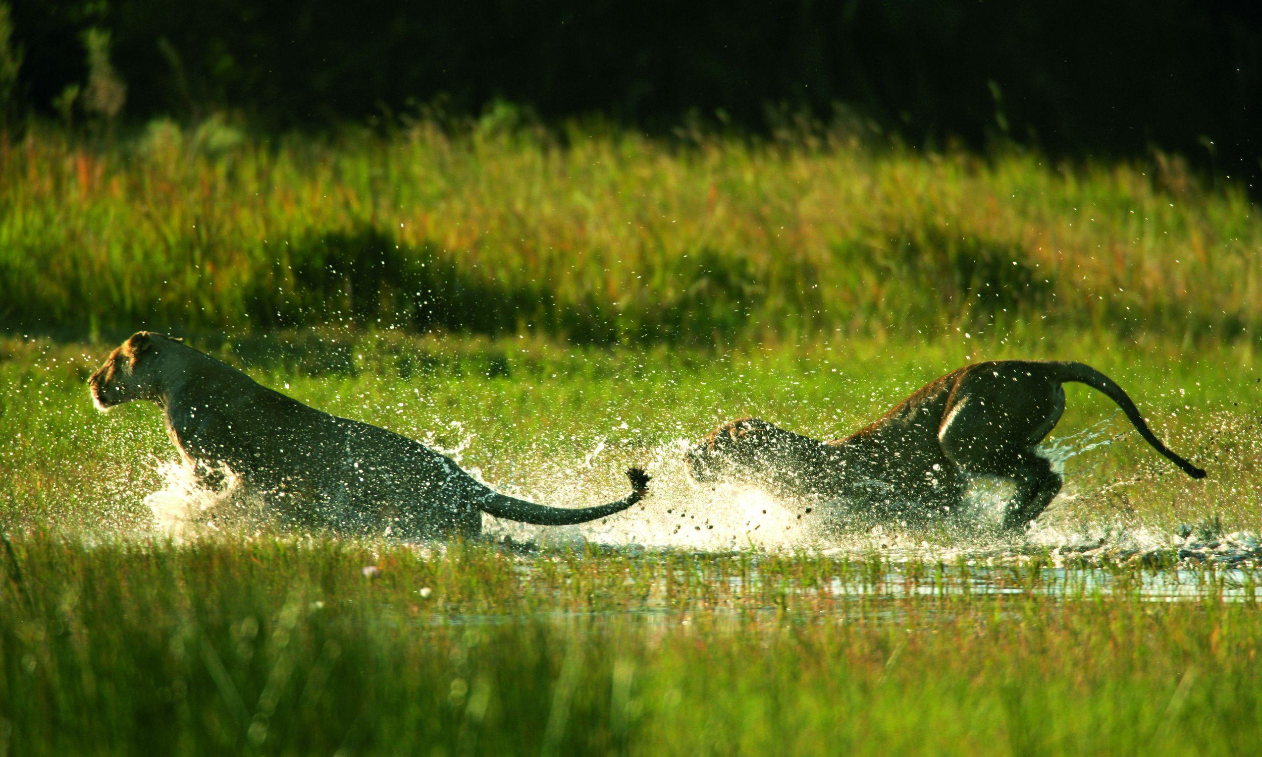 _Copyright_Beverly_Joubert_Duba_Wildlife_Botswana_3990.jpg