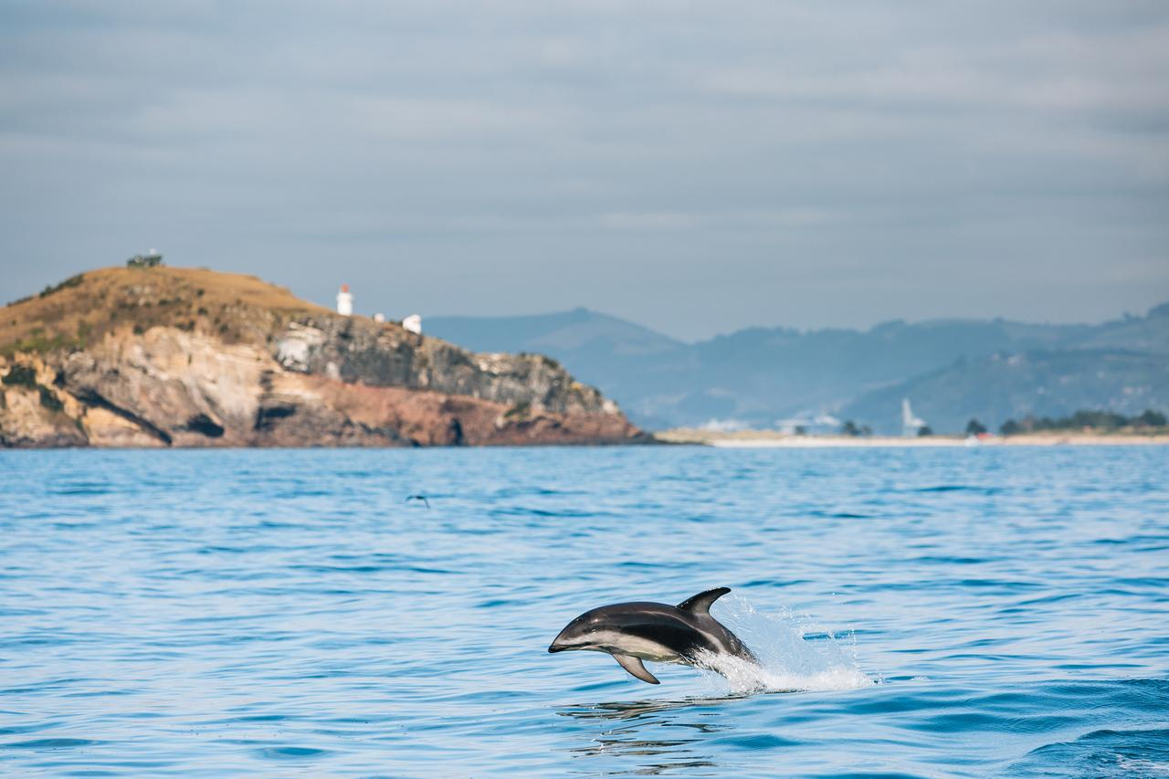 NZ dolphin tour.jpg