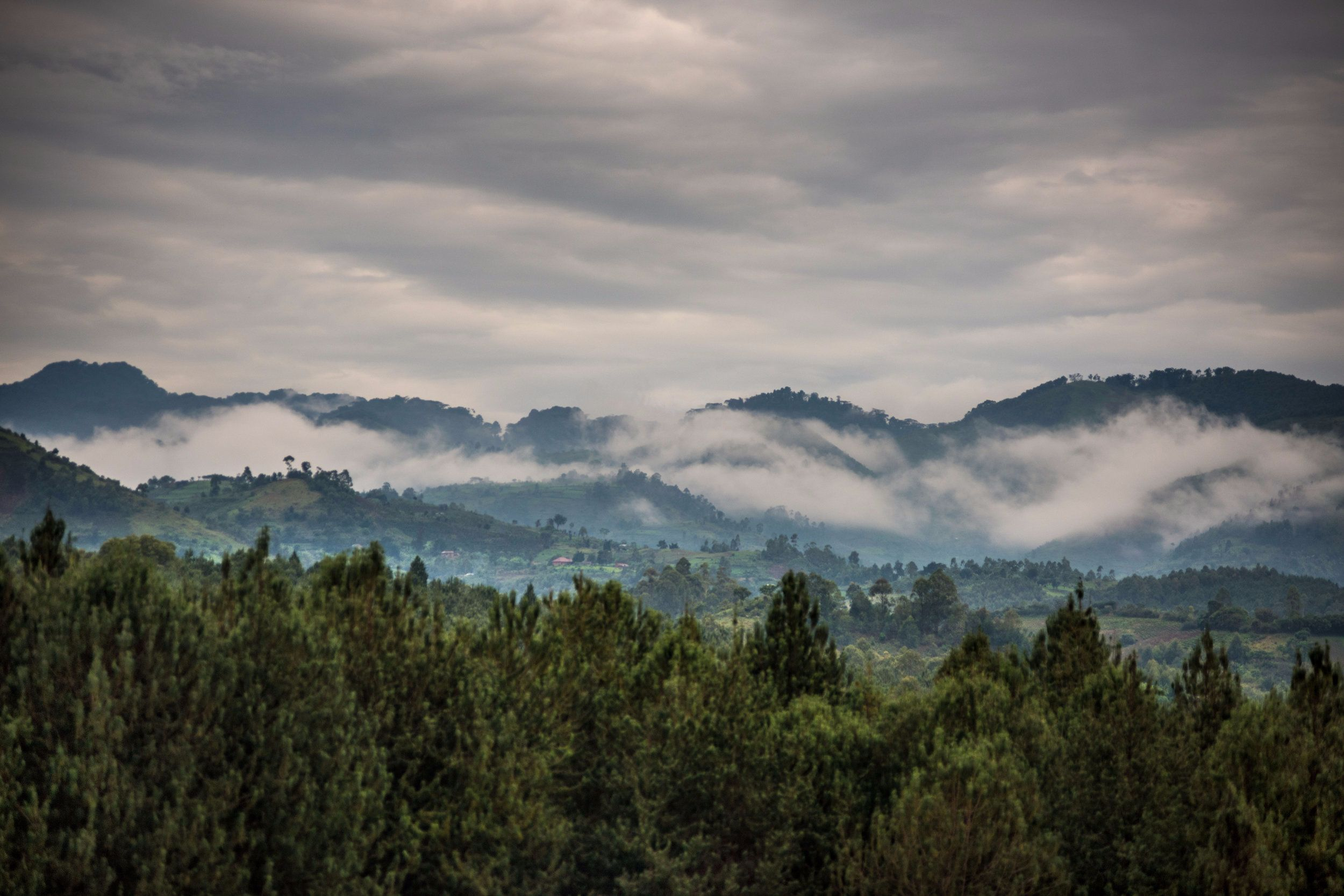 Bwindi_landscape.jpg