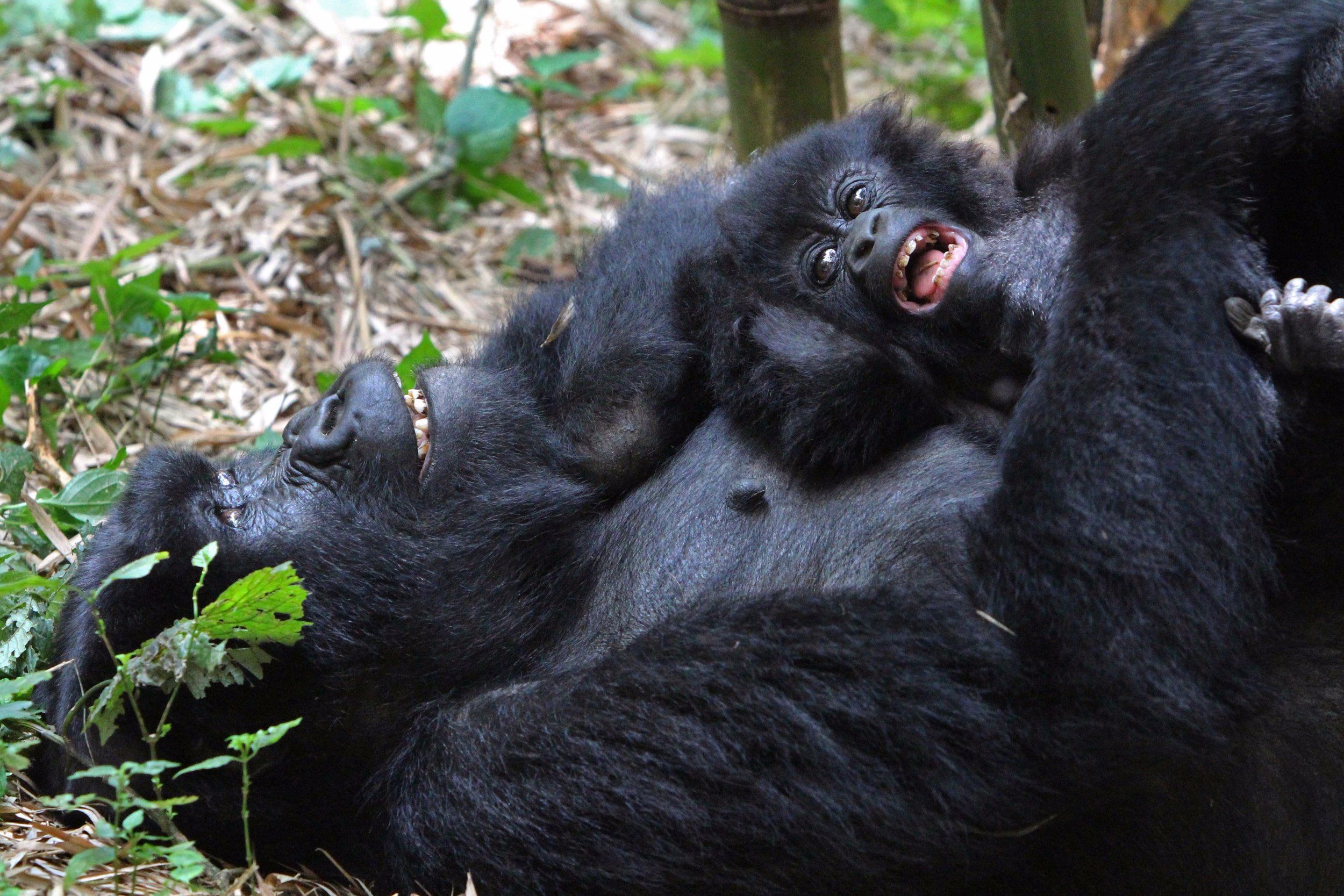 Bwindi_gorilla+(2).jpg