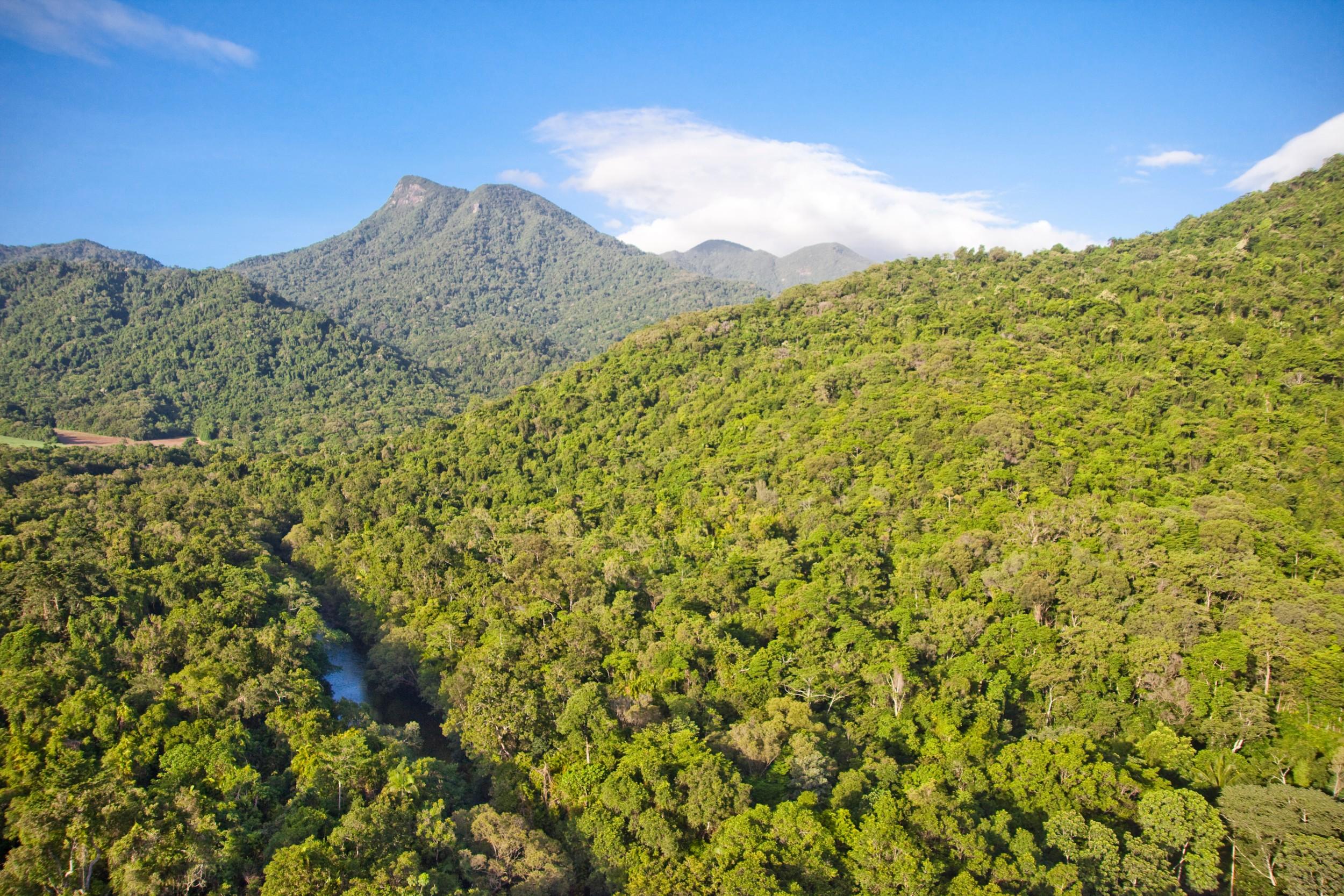 Silky Oaks aerial  Mt Demi  Rainforest (1).jpg