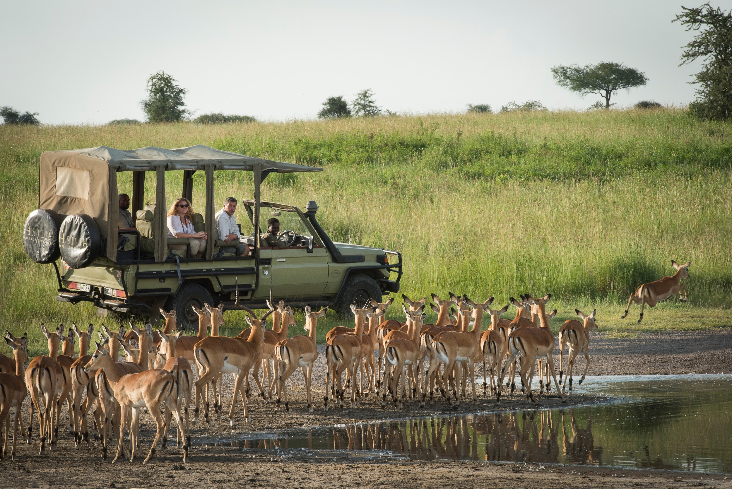 Dunia-Camp-guests-game-drive-bush-bucks-2-HR-Eliza-Deacon.jpg