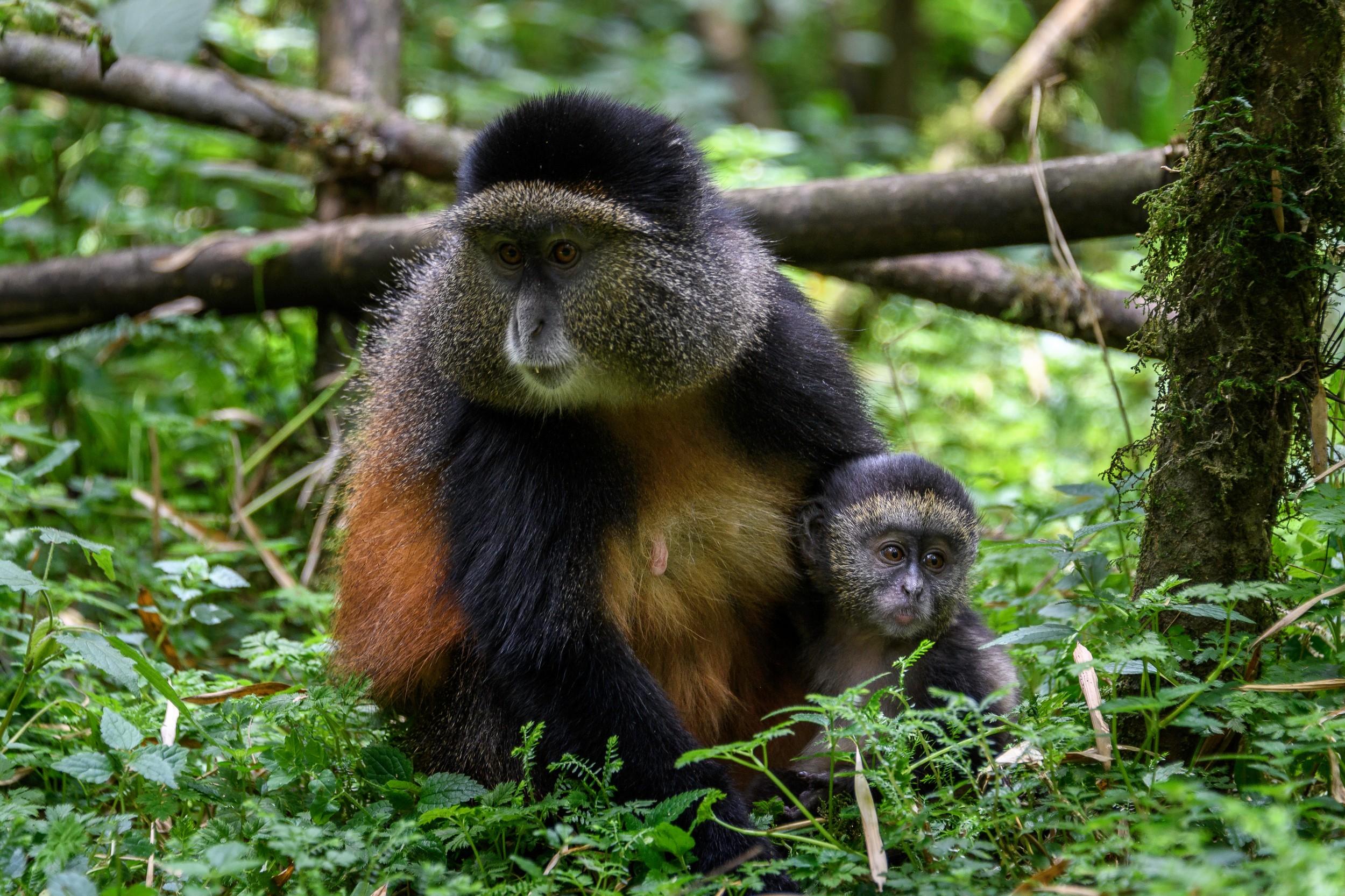 Rwanda-212.jpg