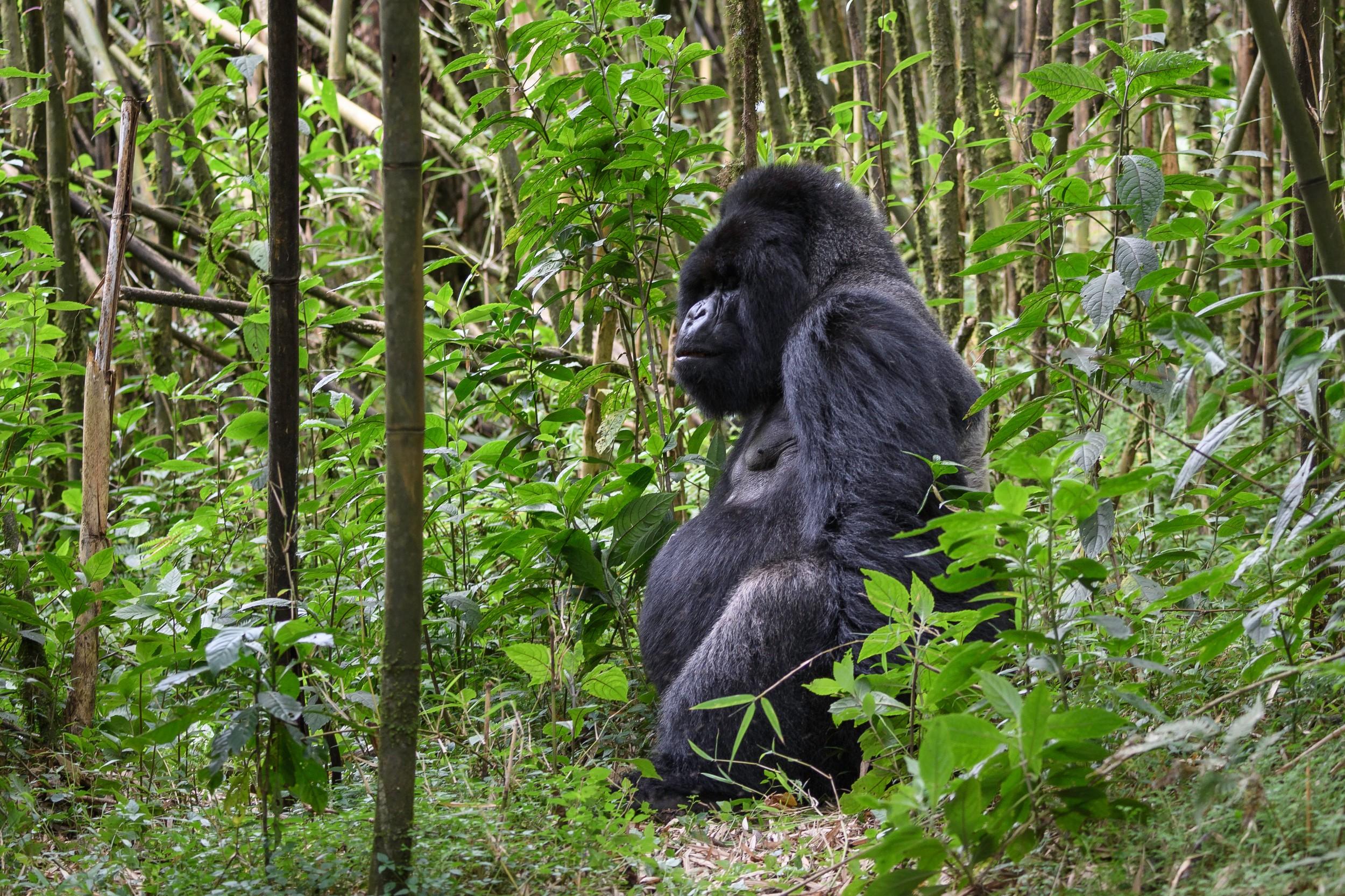 Rwanda-251.jpg