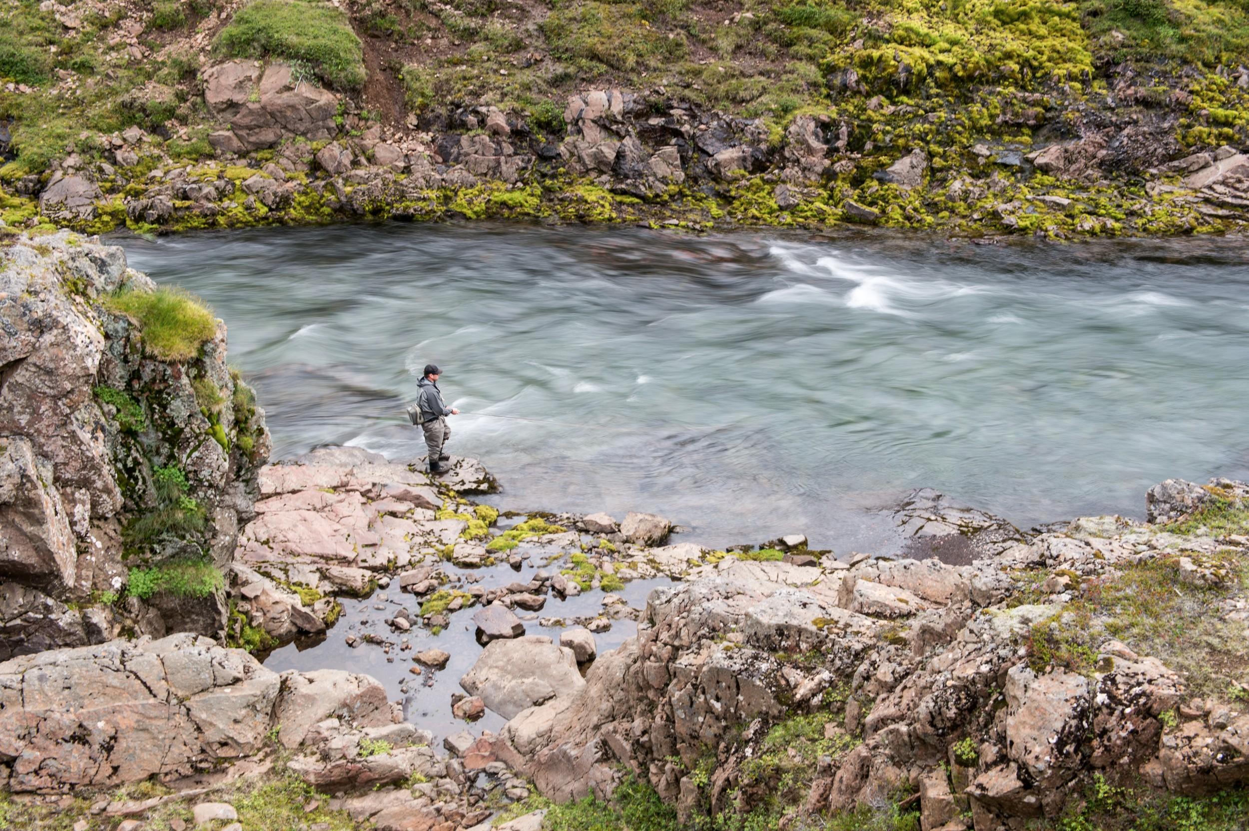 Iceland_Fish_8.jpg