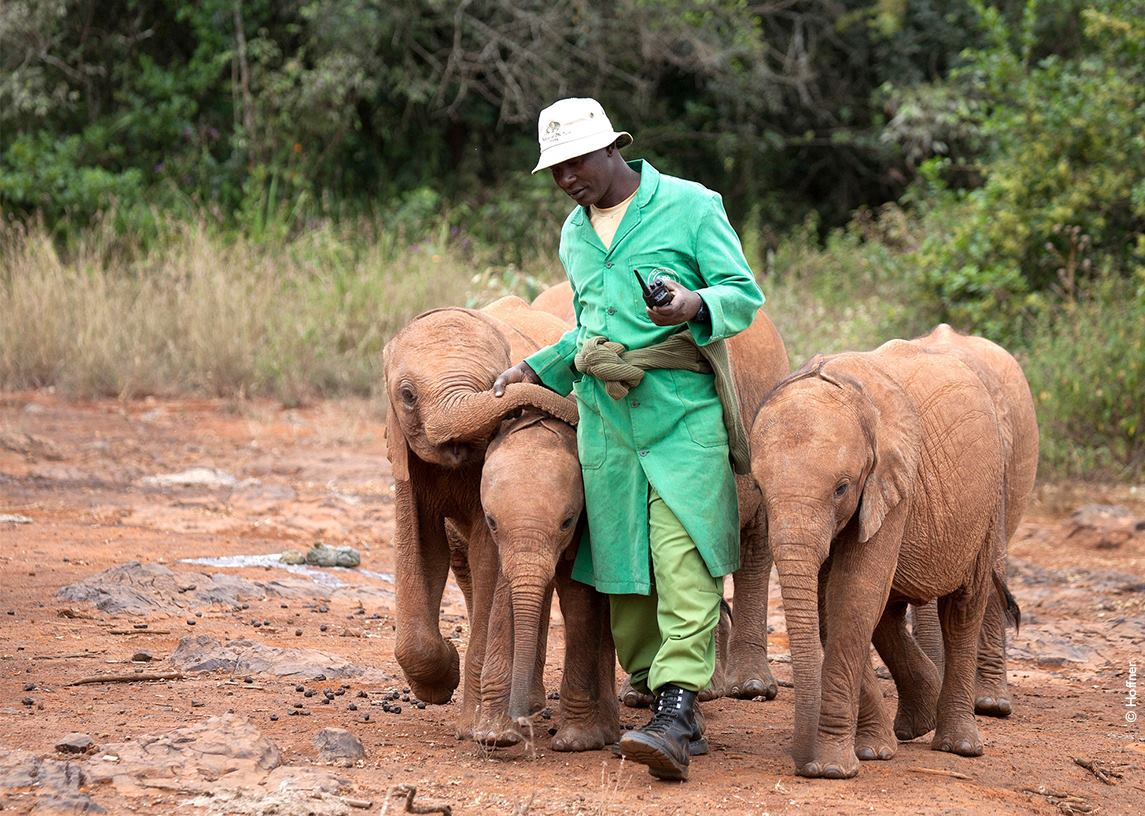 David Sheldrick<BR>Wildlife Trust<br><p>KENYA</p>