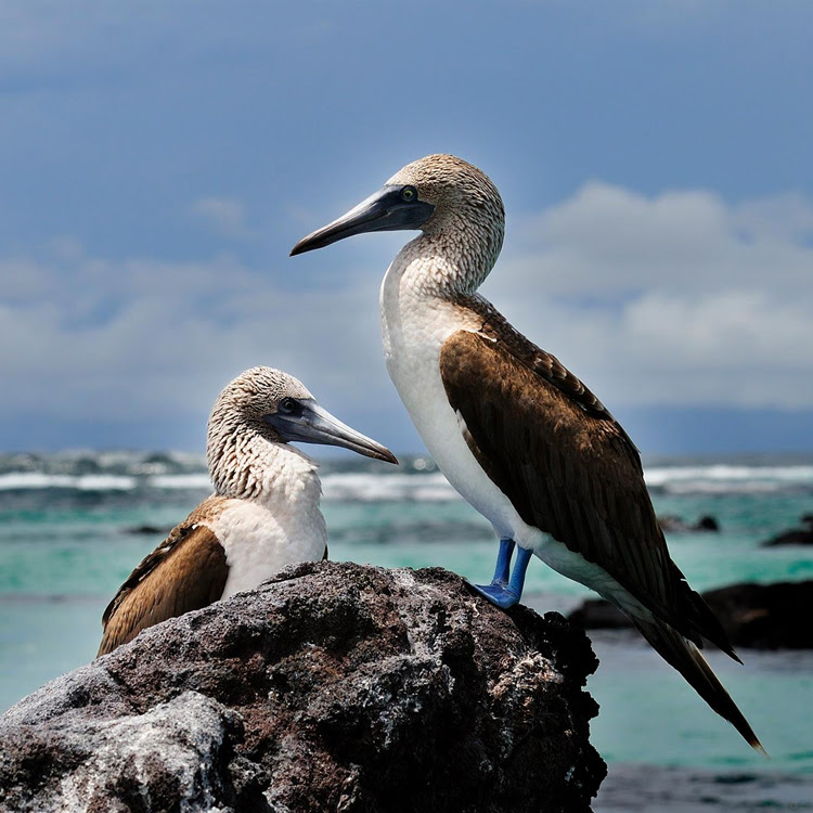 Photo by Galapagos Safari Camp | Galapagos Islands
