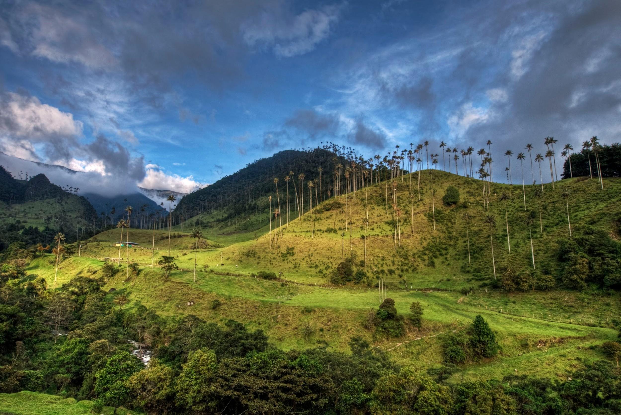 Excursions - Valle Cocora (9).jpg