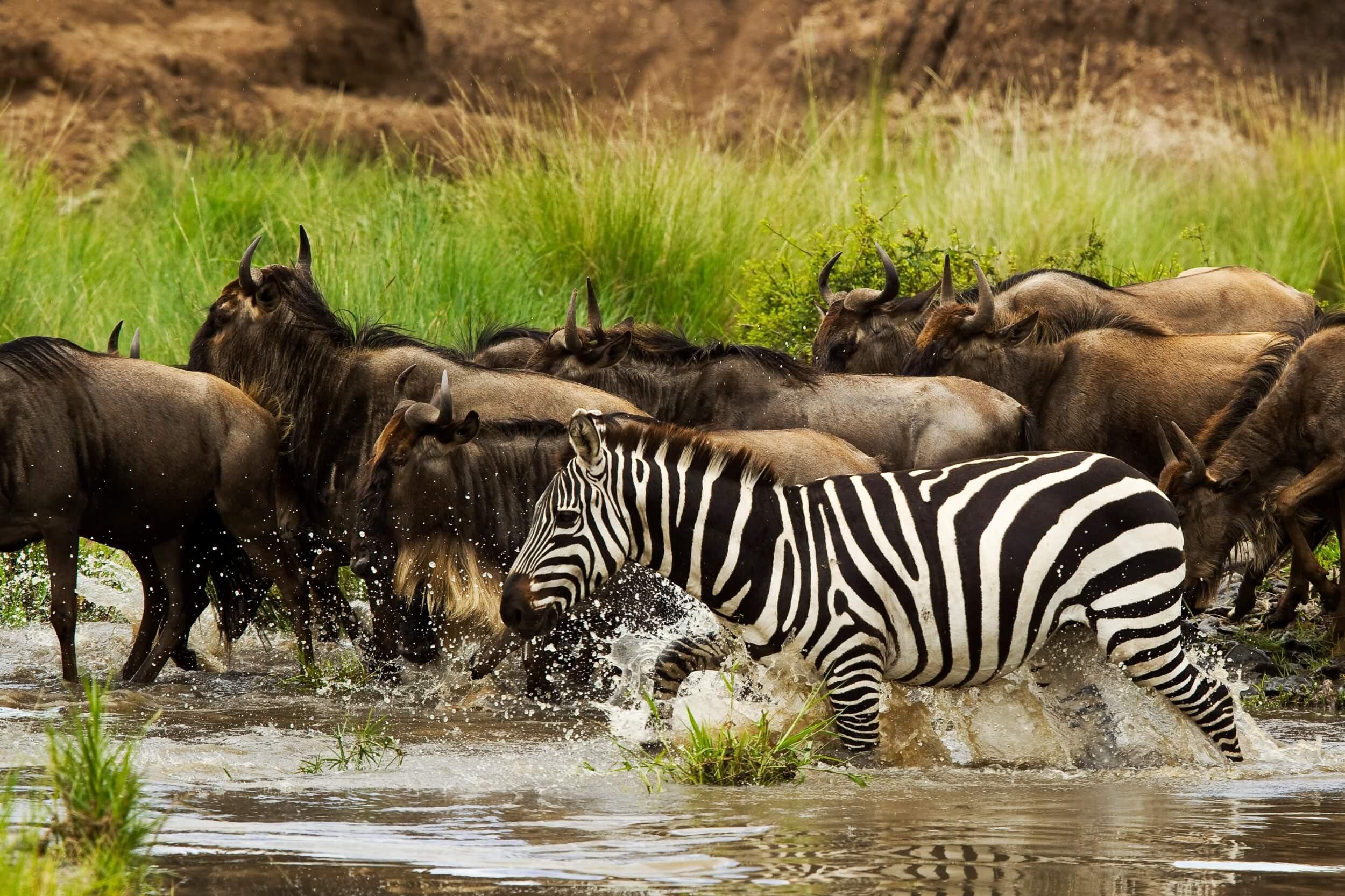 MaraExpeditionCamp-Wildlife-GreatPlainsConservation-17.jpg
