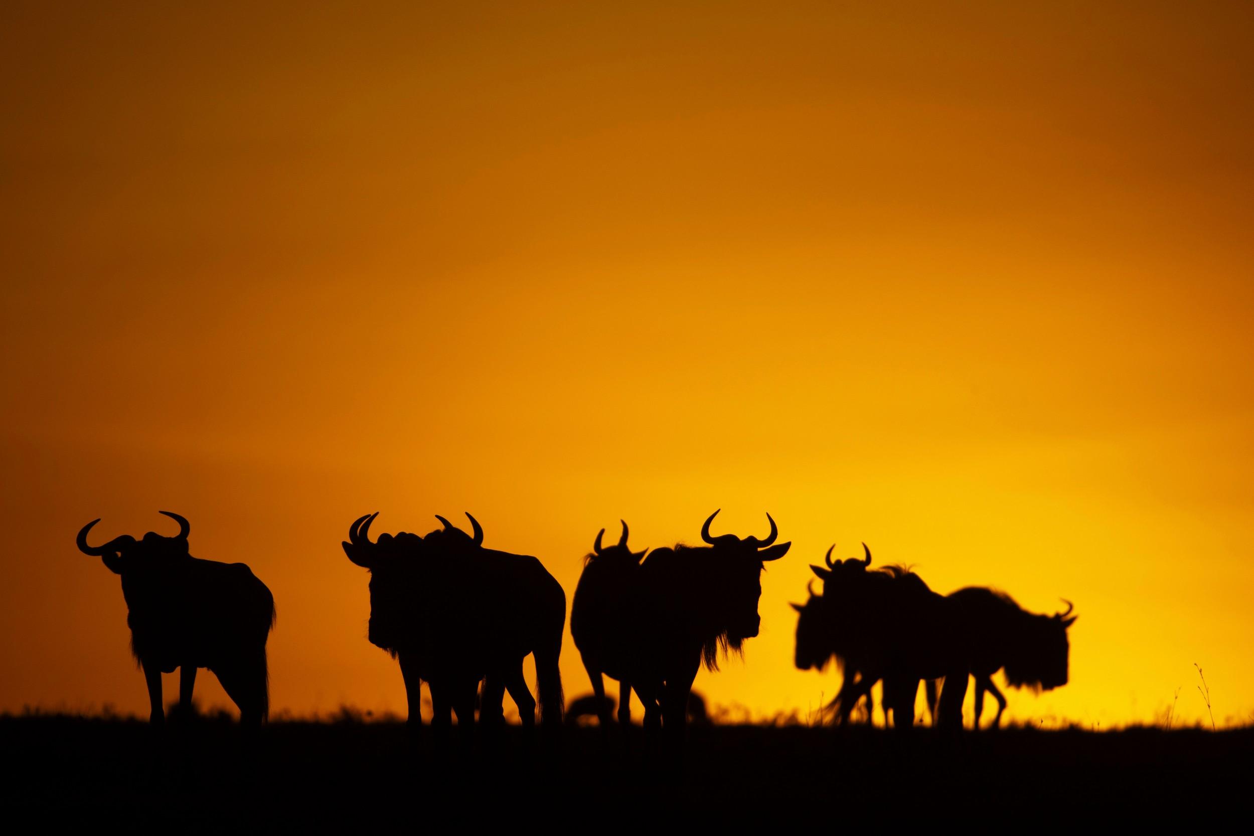 MaraExpeditionCamp-Wildlife-GreatPlainsConservation-21.jpg