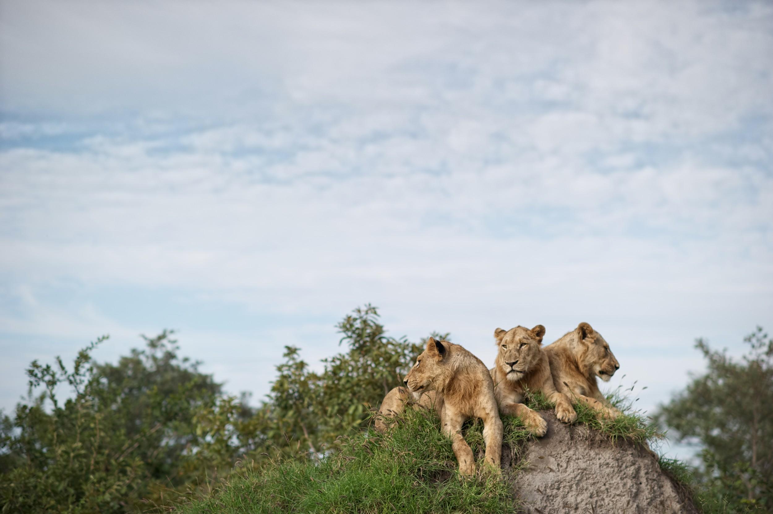 Singita-Lebombo-Wildlife3.jpg