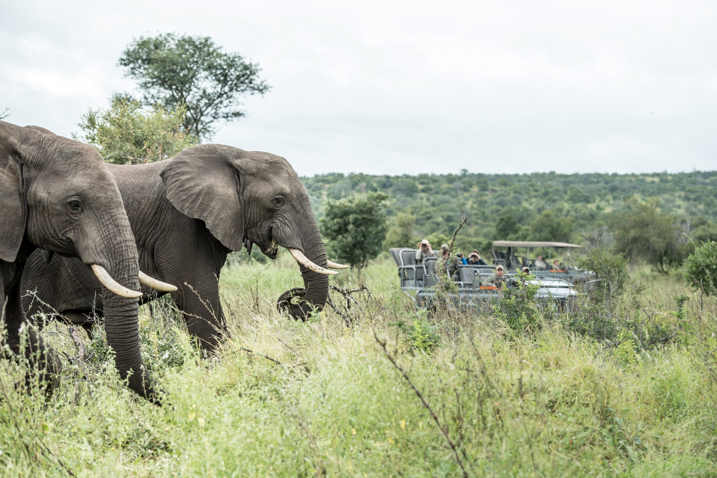 Wildlife (Singita Kruger National Park)-87.jpg