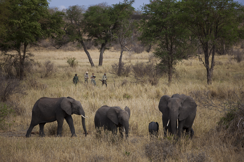 Jabali-Ridge-walking-safari-elephants.jpg