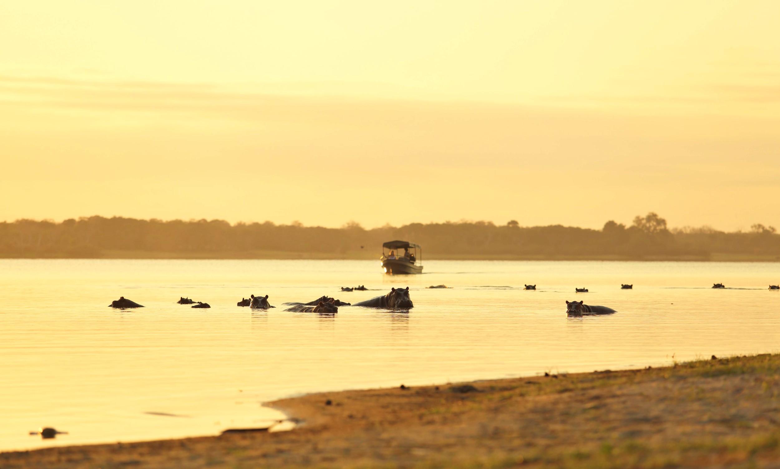 Boating-safari-hippo-spot.jpg