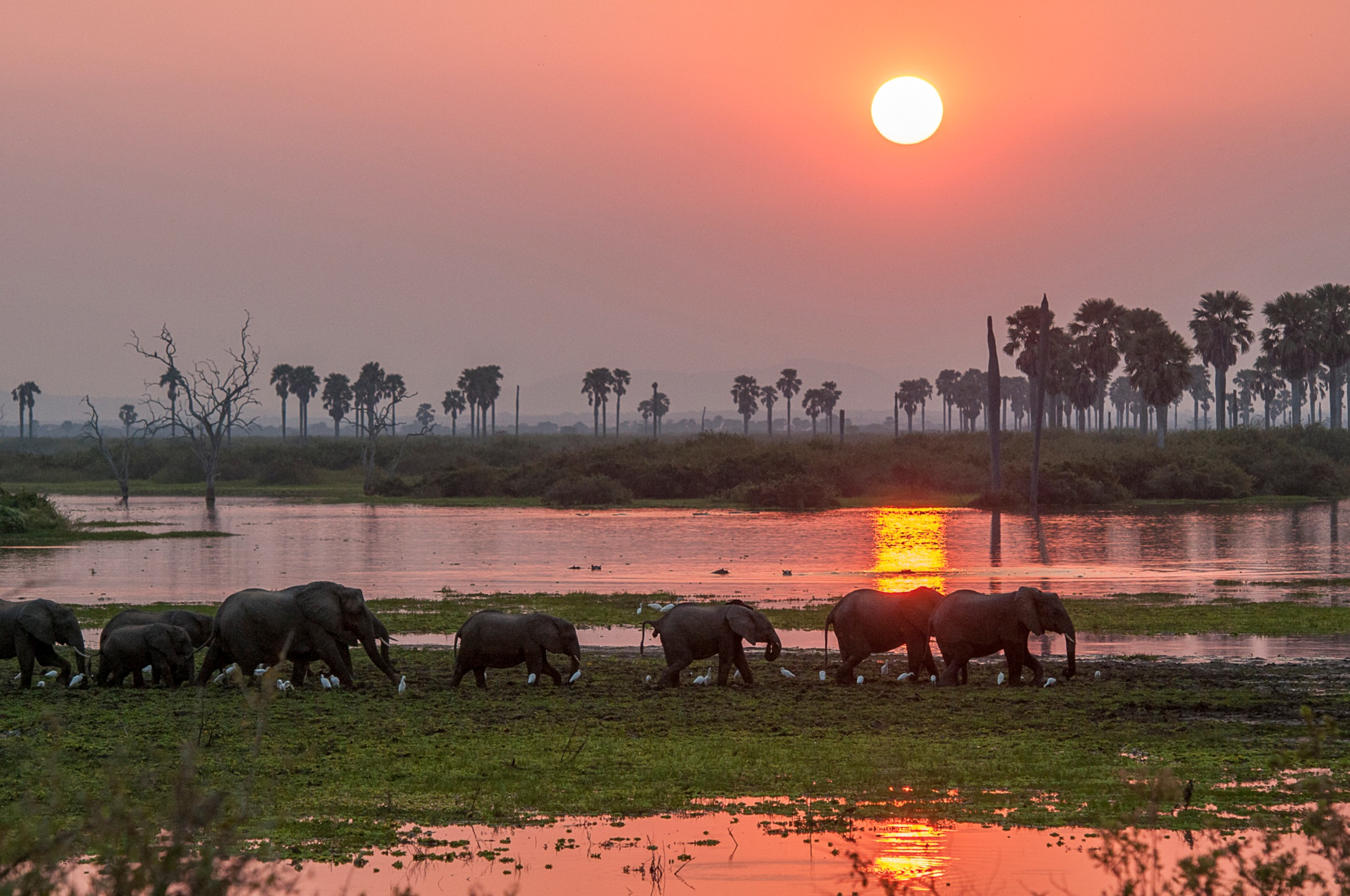 Selous-river-sunset-RR.jpg