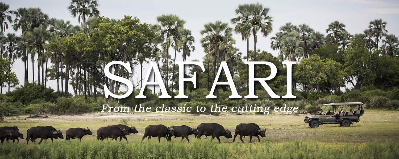 BANNER_safari_BUFFALO.jpg