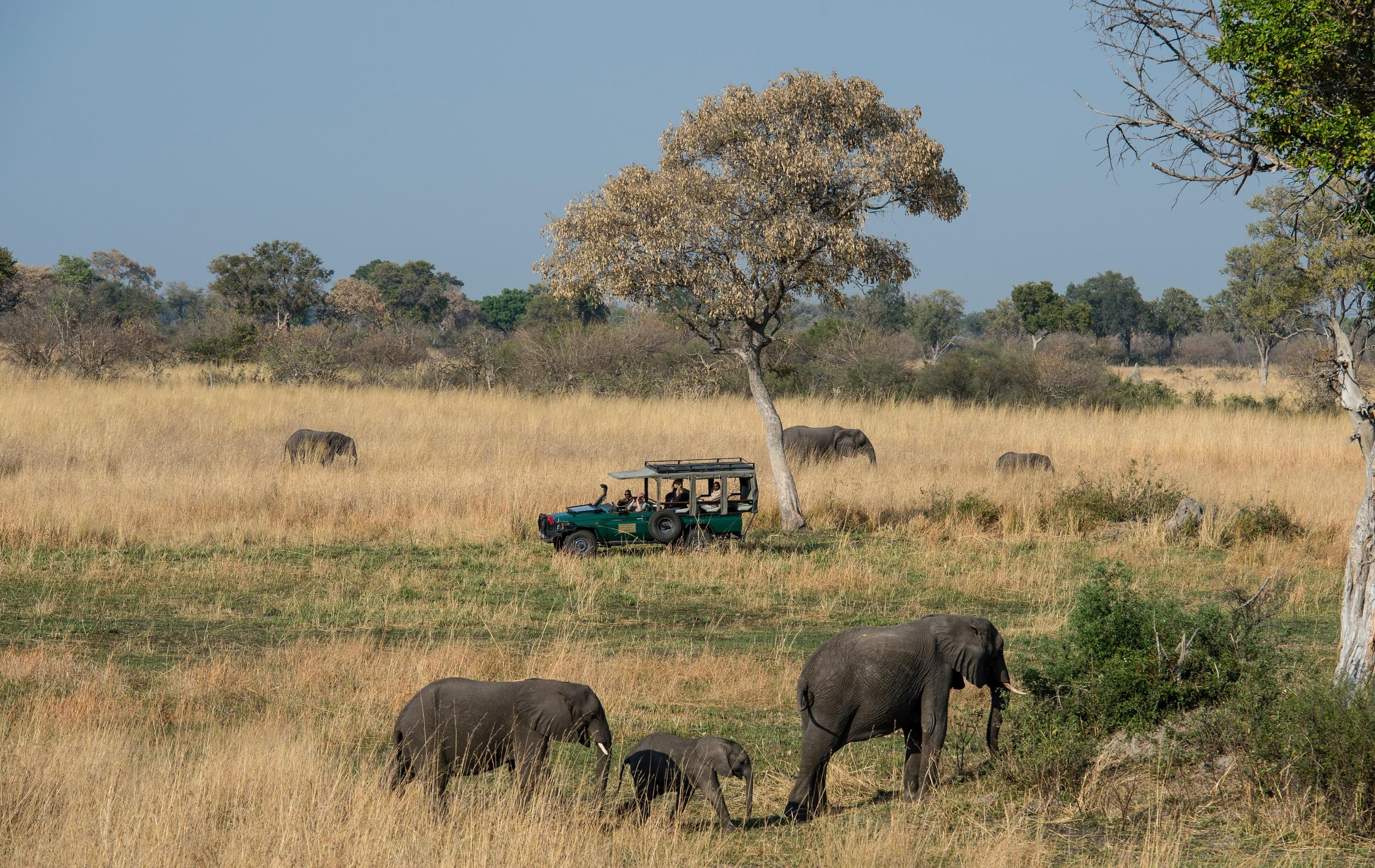 22Mapula Lodge - elephant.jpg