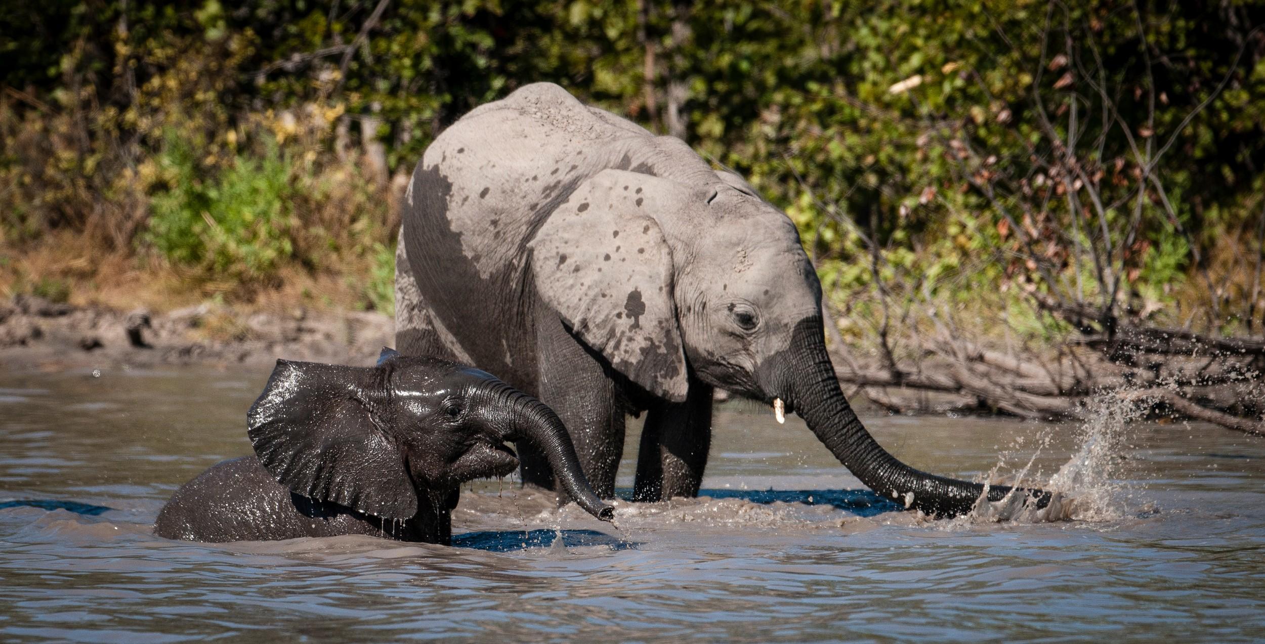 31Mapula Lodge - Elephants.jpg