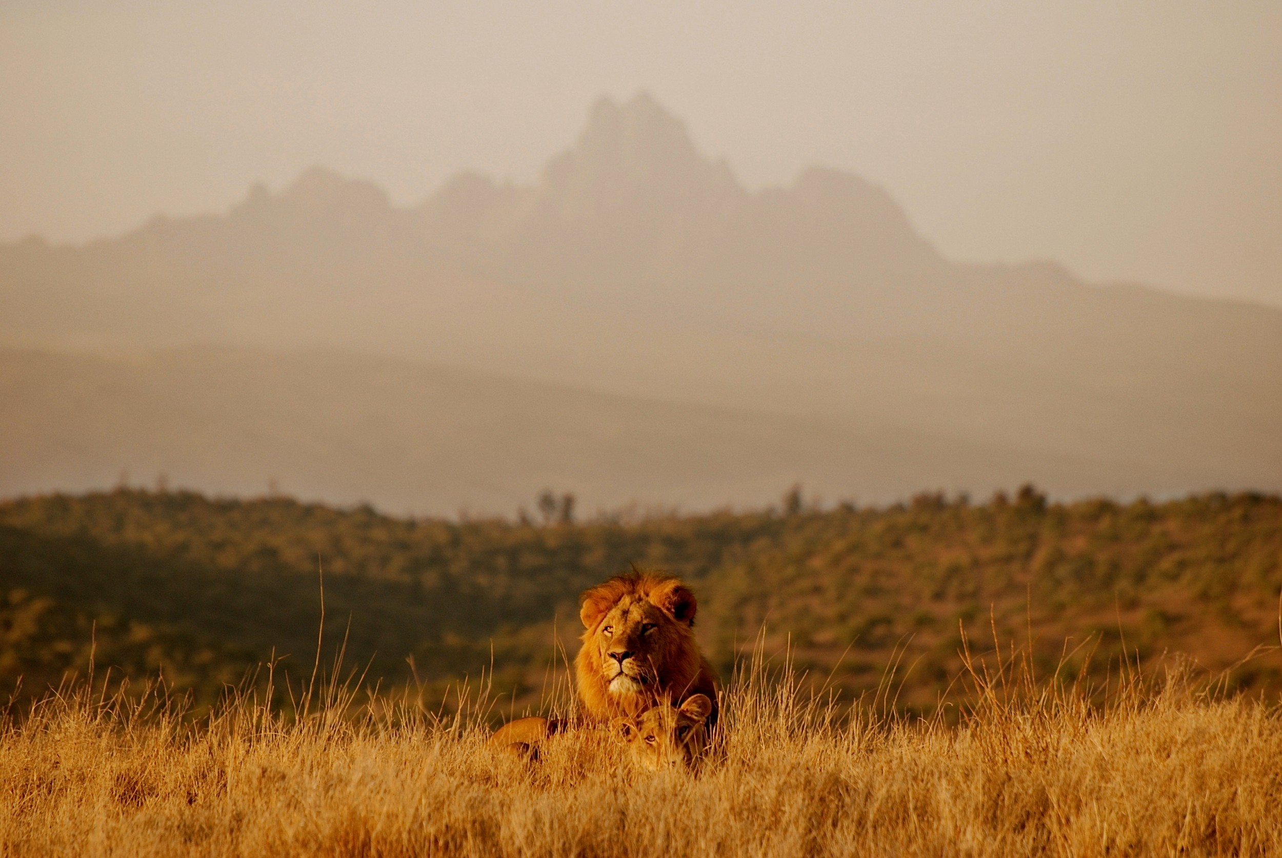 lion_changed.jpg