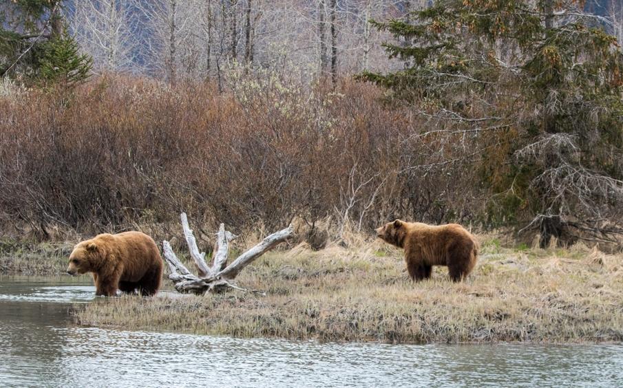 AWCC 3 Brown Bears Spring 2017 (2).jpg