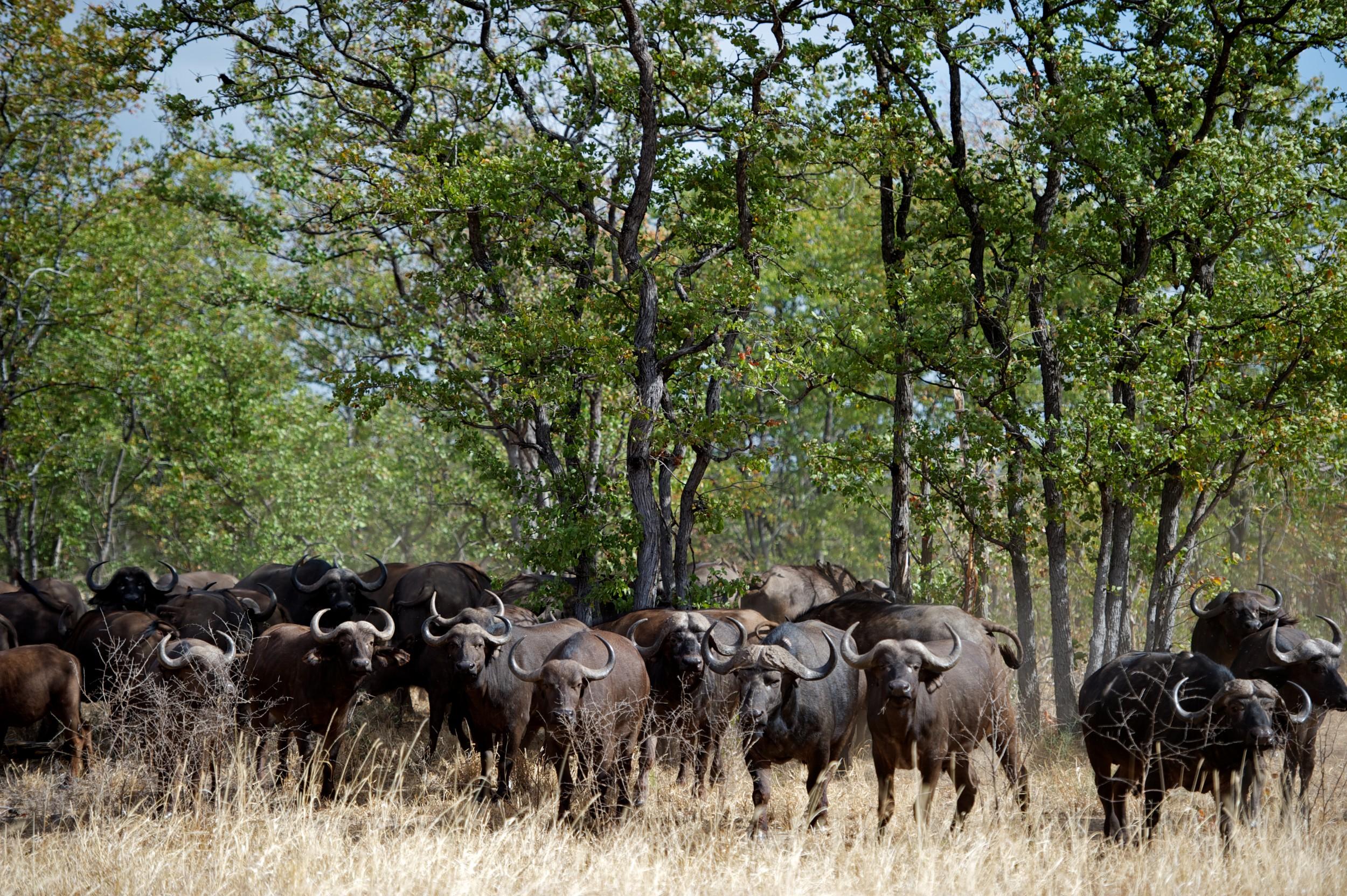 Singita Pamushana lodge in Zimbabwe.jpg