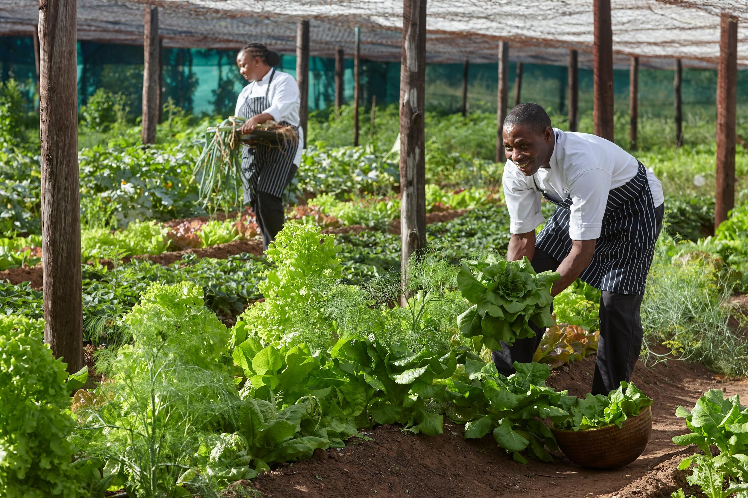 Singita Pamushana Lodge-Vegetable Garden.jpg