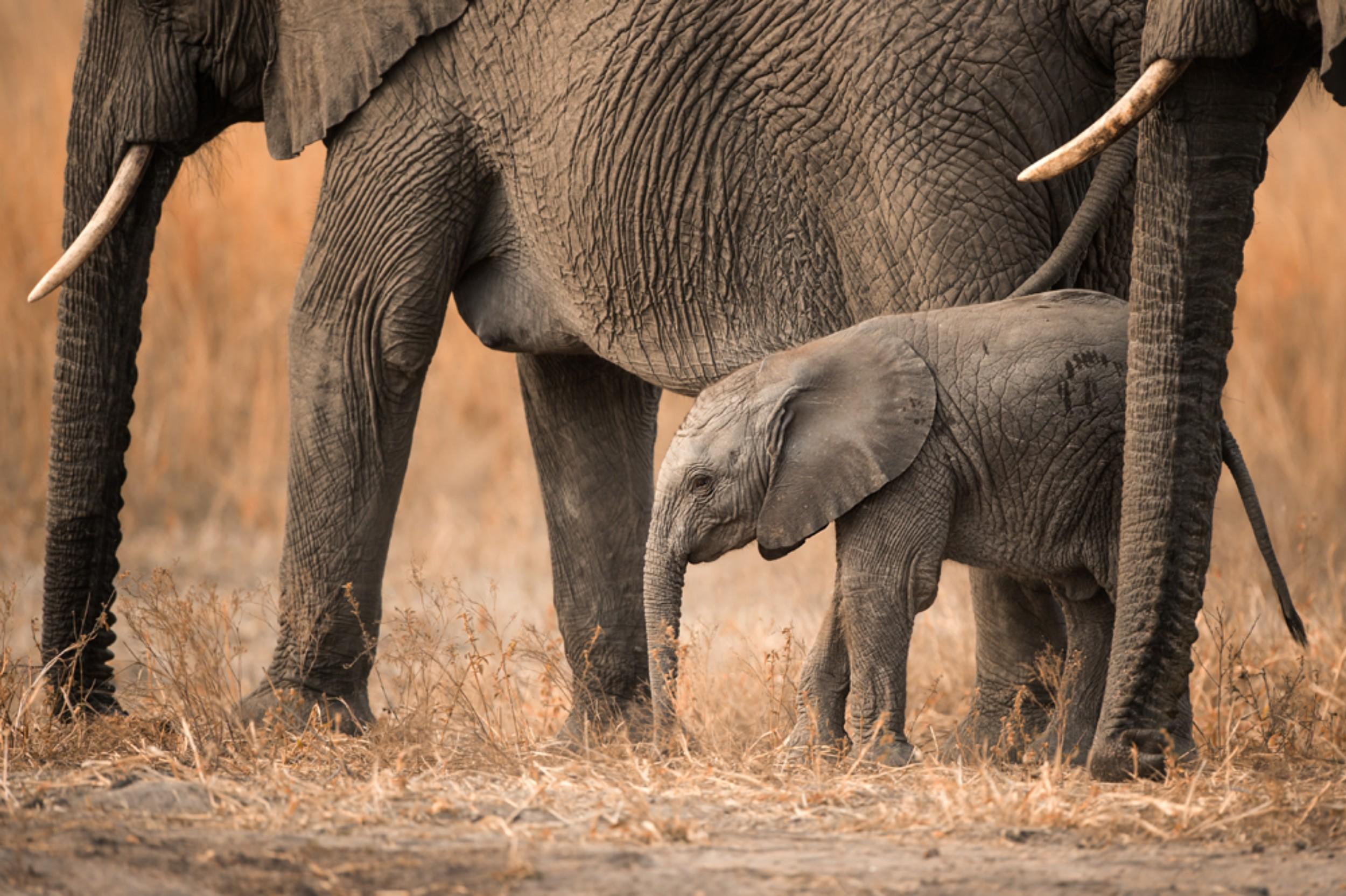 Singita Pamushana Wildlife9.jpg