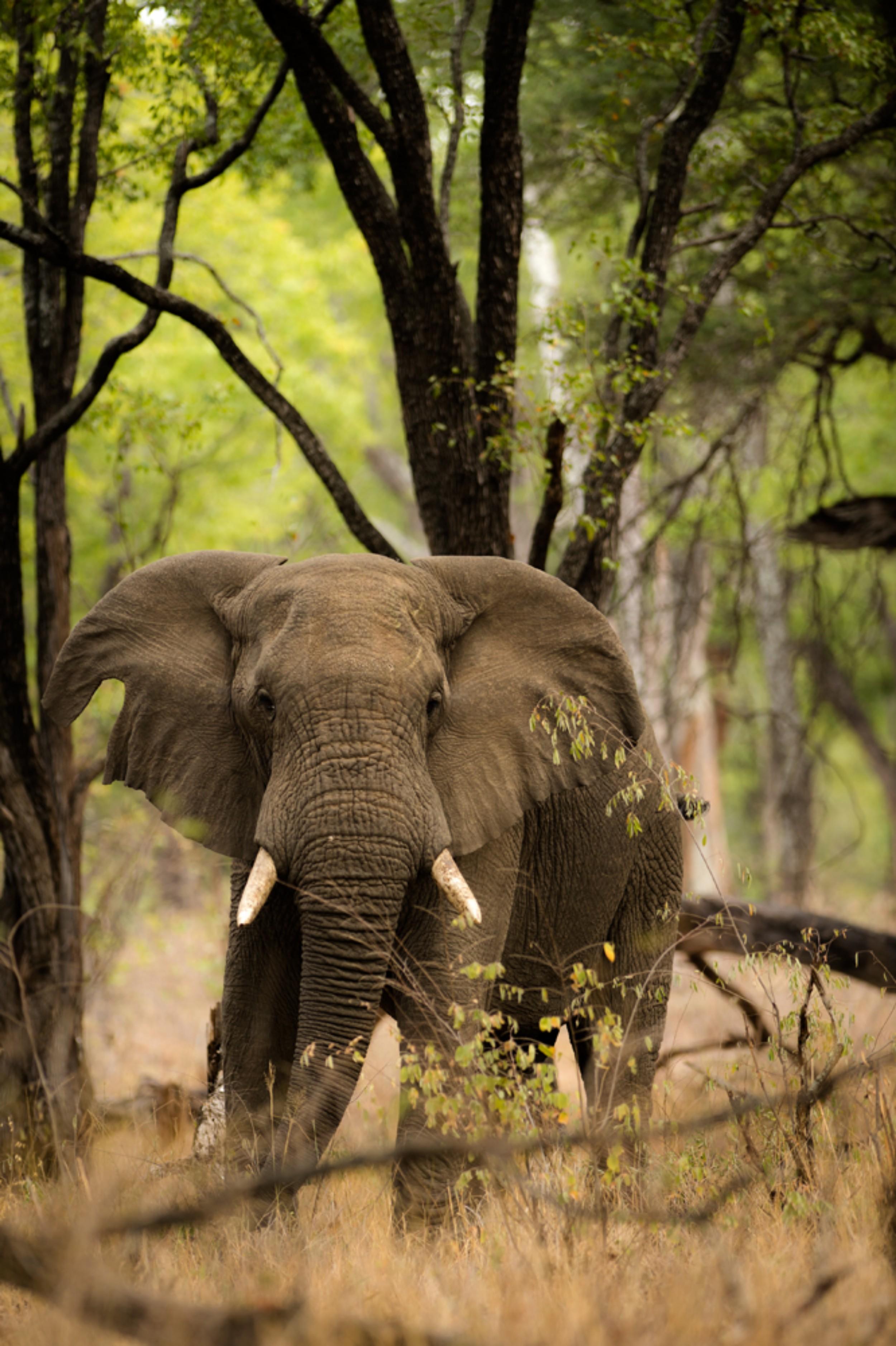 Singita Pamushana Wildlife5.jpg