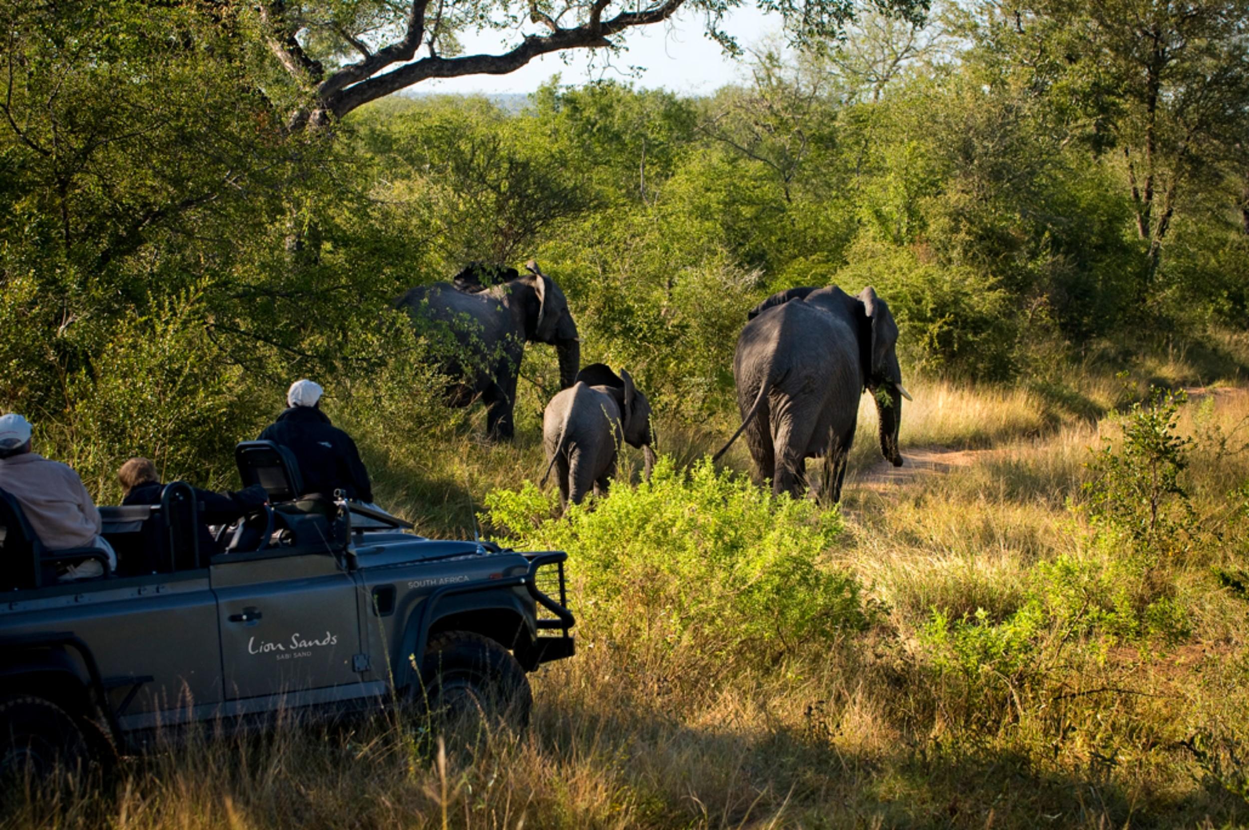 safari-051116.jpg