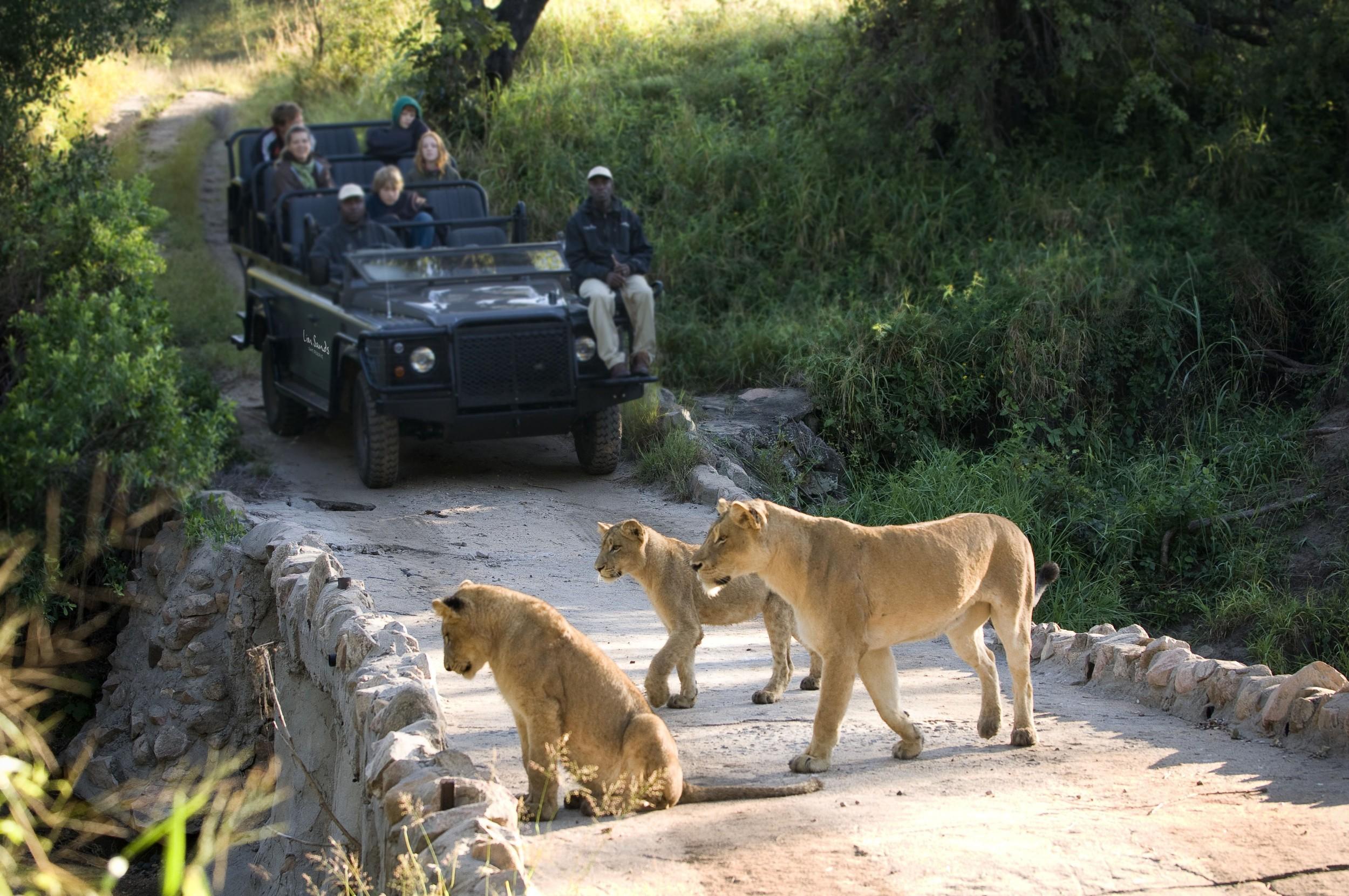 safarilionsgamedrive-050625.jpg