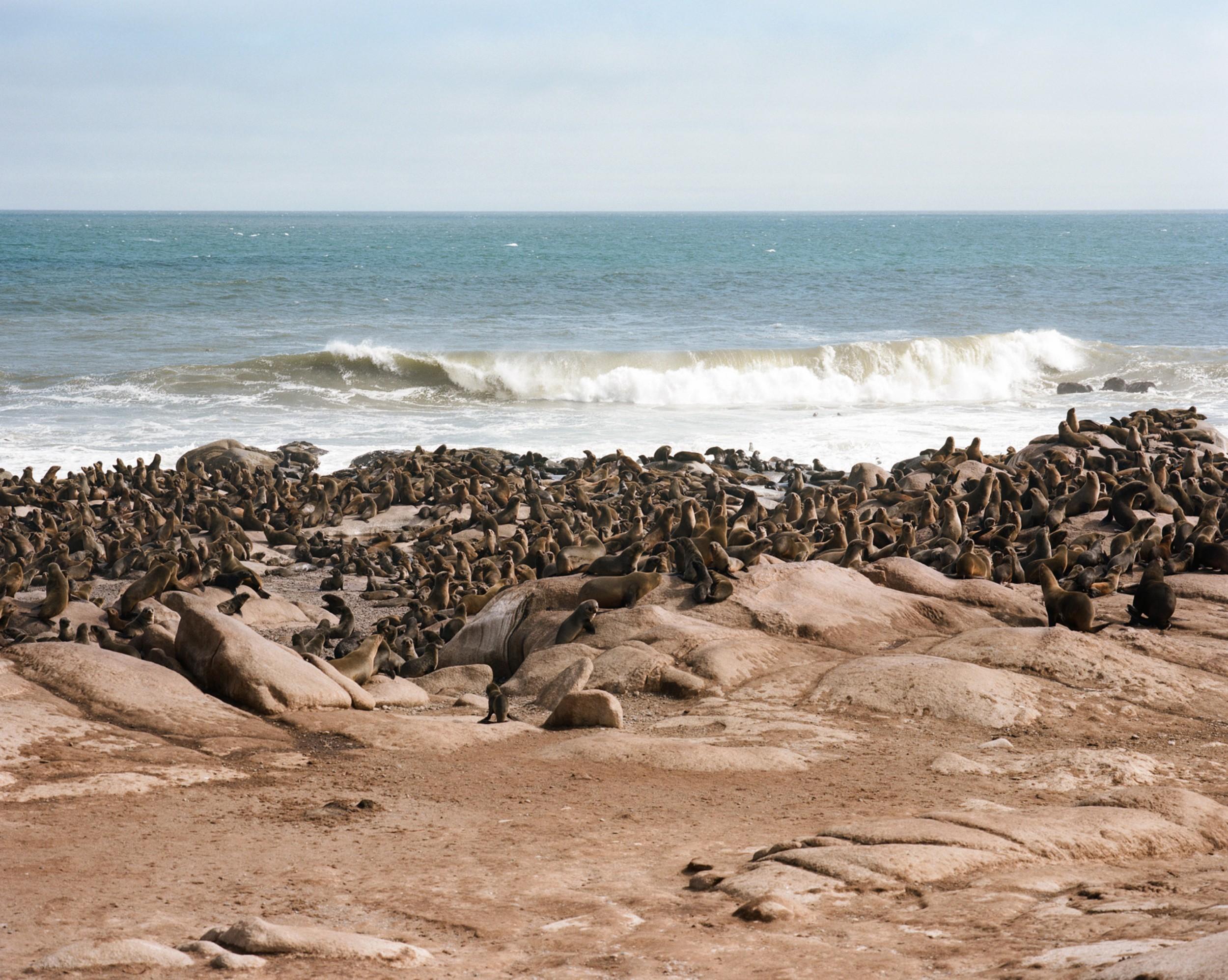 30Shipwreck Lodge - Activities - Mowe Bay seal colony.jpg