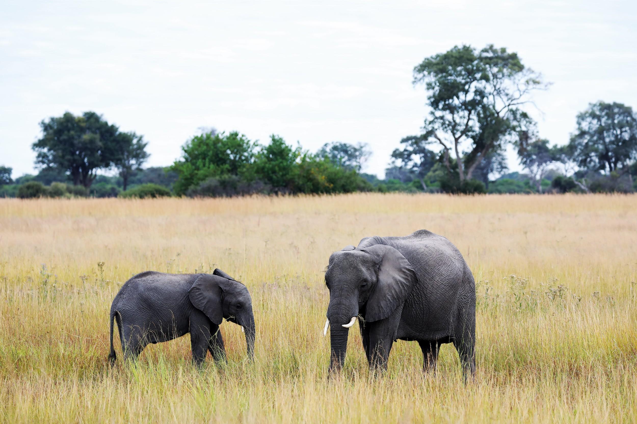 19The Jackal and Hide - Elephant mum & baby.jpg