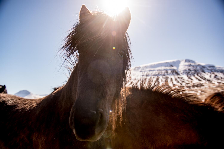 Iceland_Scenic_2.jpg