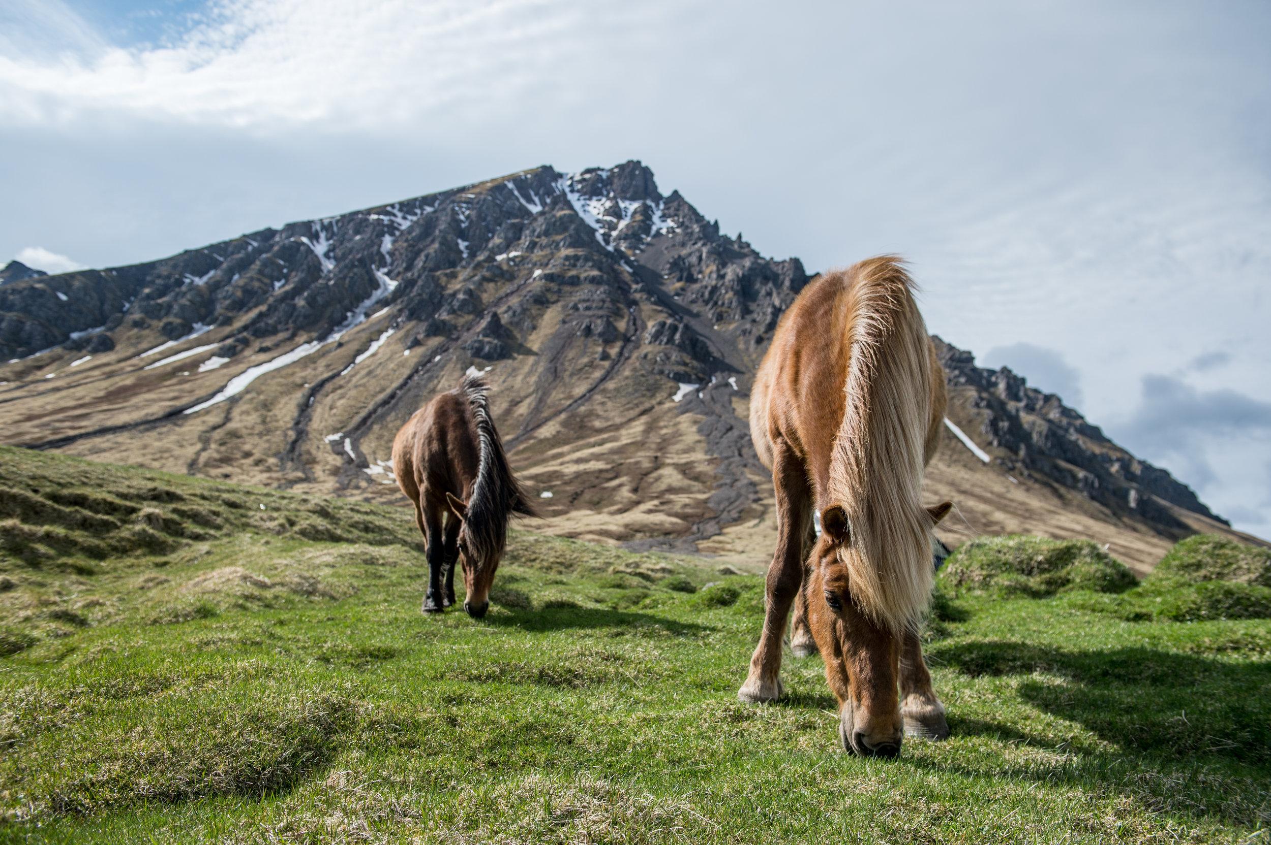 Iceland_Scenic_7.jpg