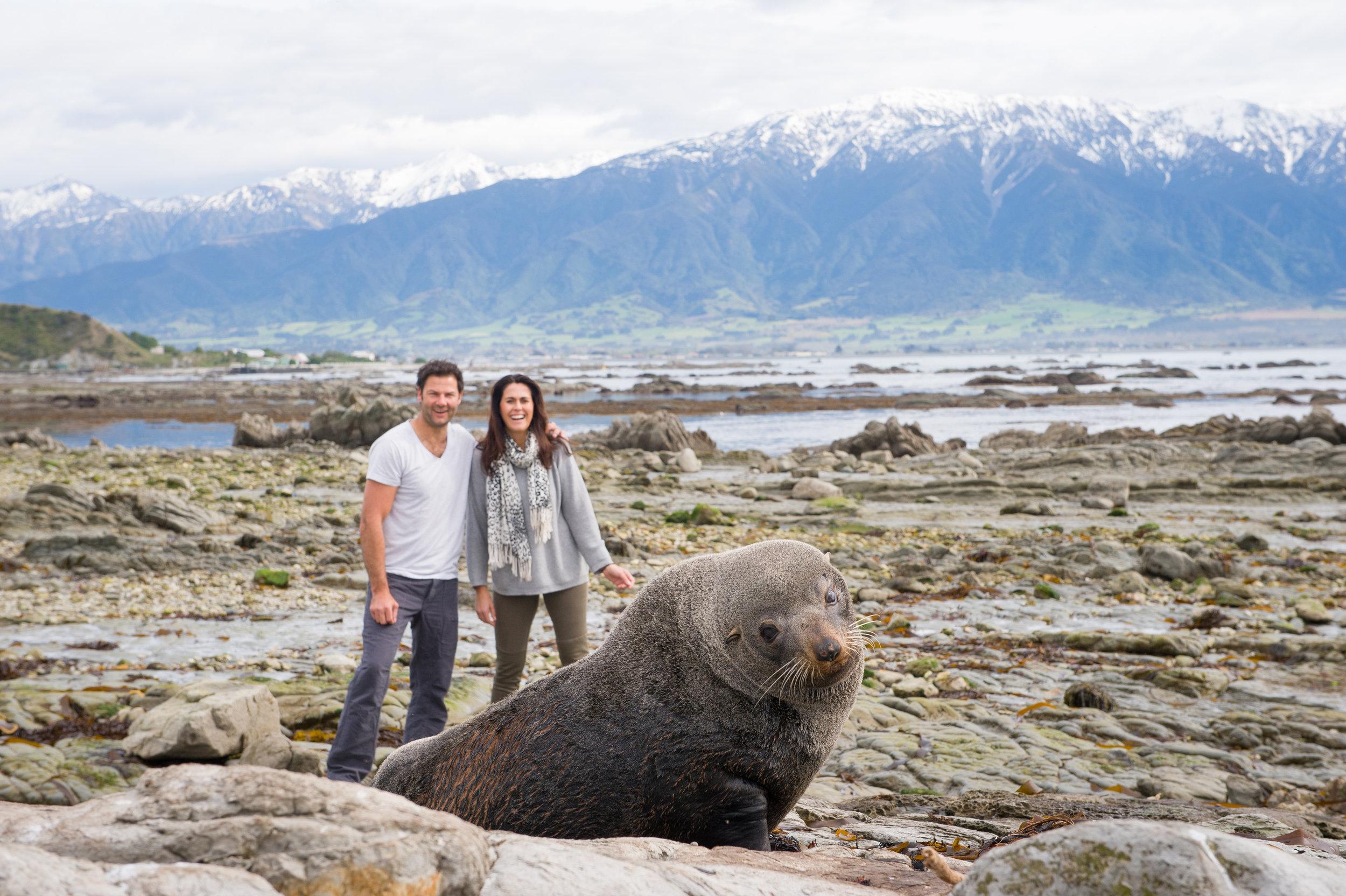 Kaikoura Seal Colony 1.jpg