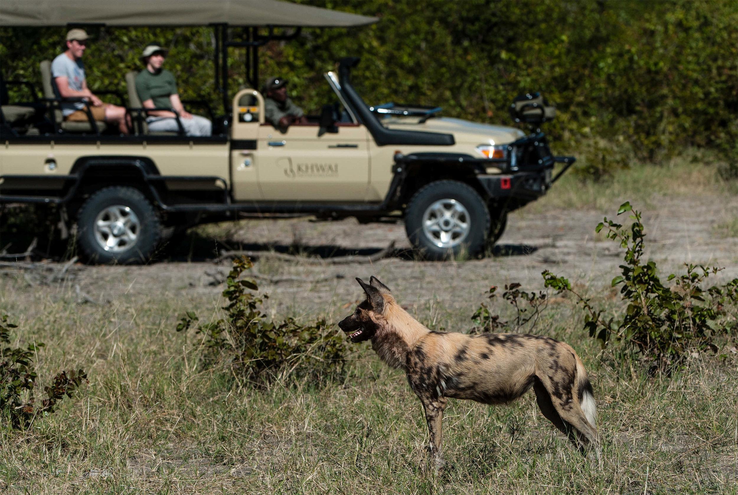 27Tuludi - Wild dog sightings copy.jpg