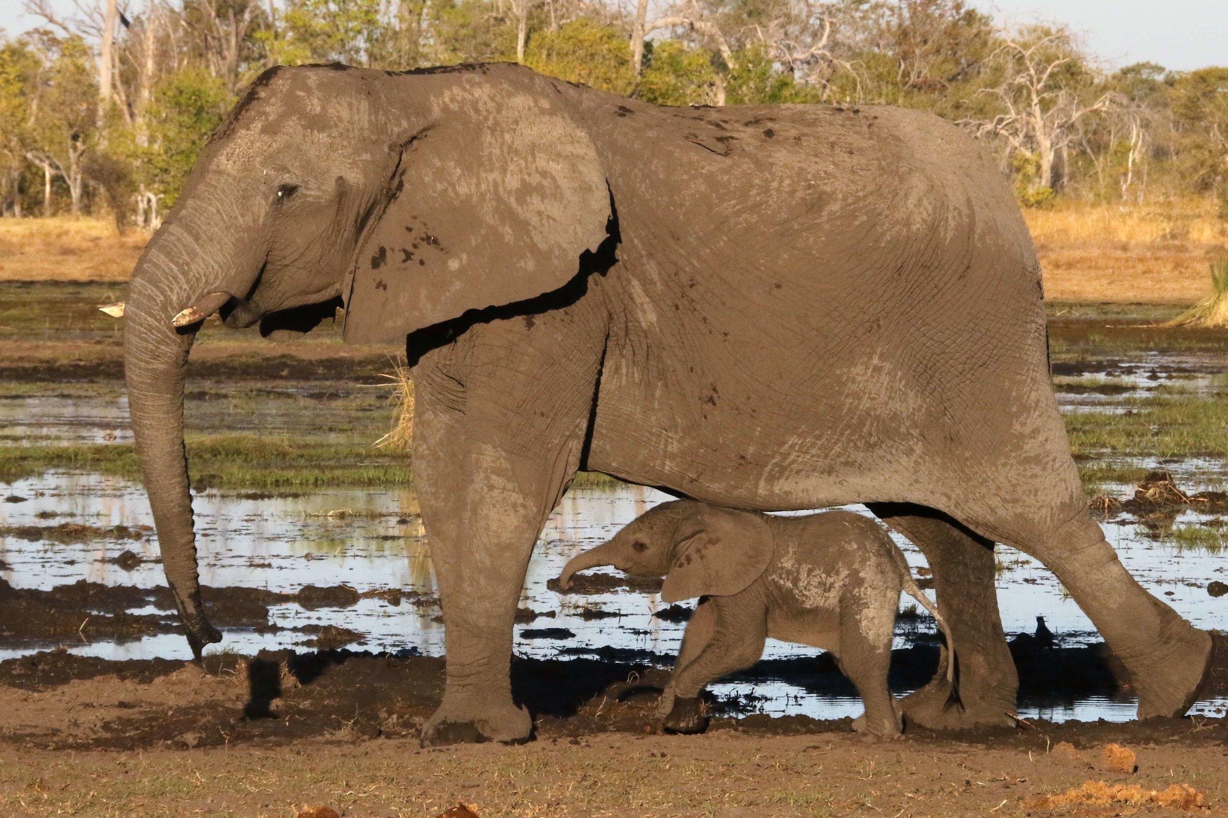 36Tuludi - Elephant and baby.JPG