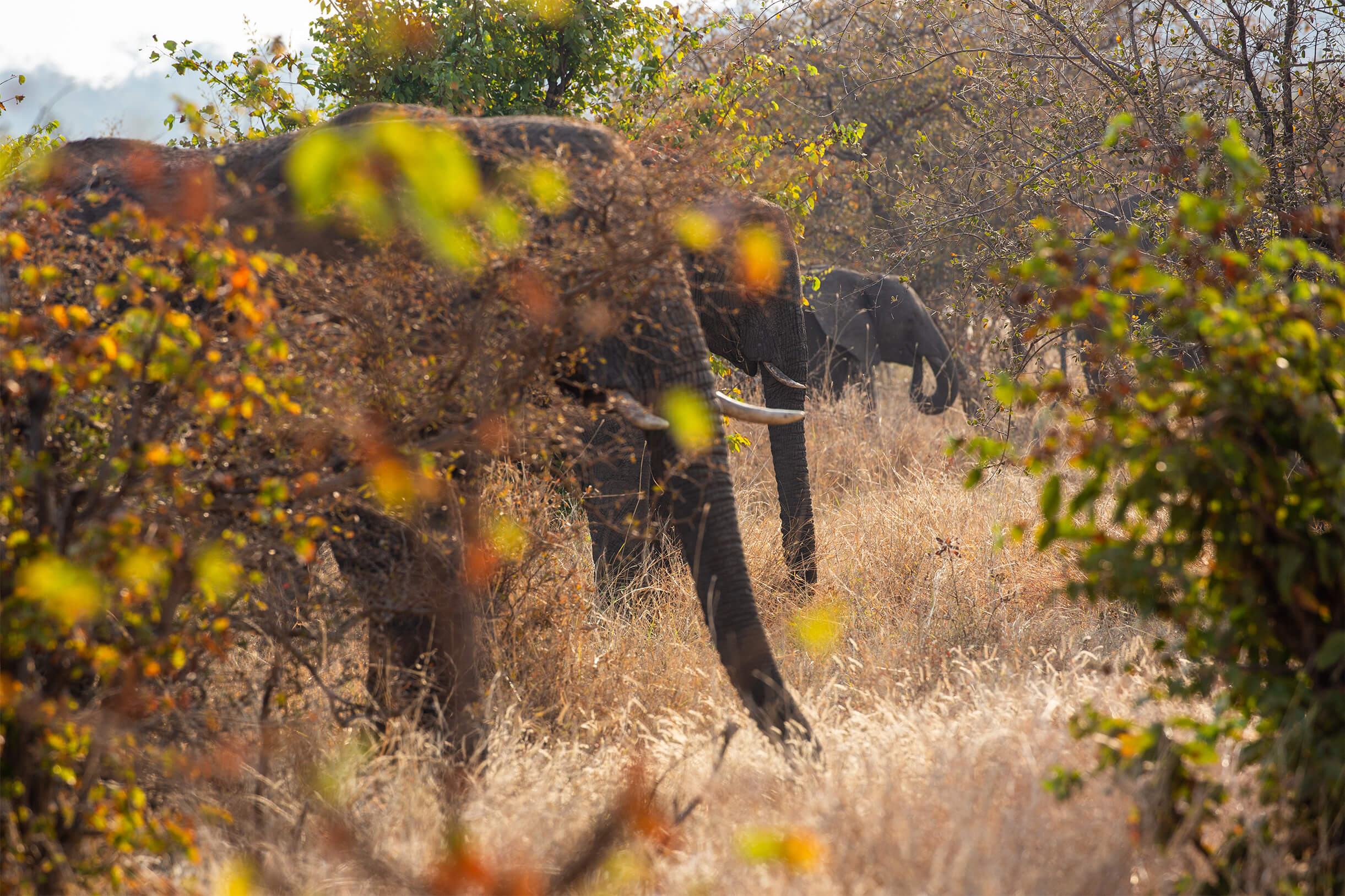 GPZimbabwe-MpalaJena-WildlifeElephants.jpg