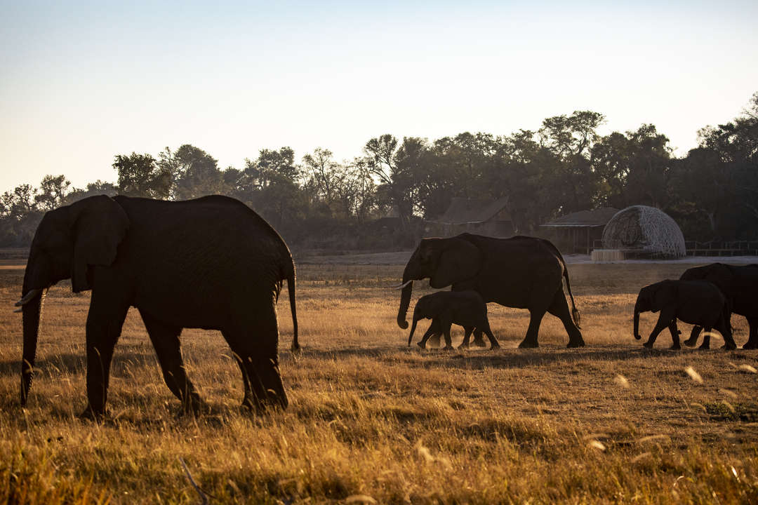 original_dimensions_Wilderness-Safari-Jao-Botswana-4698.jpg