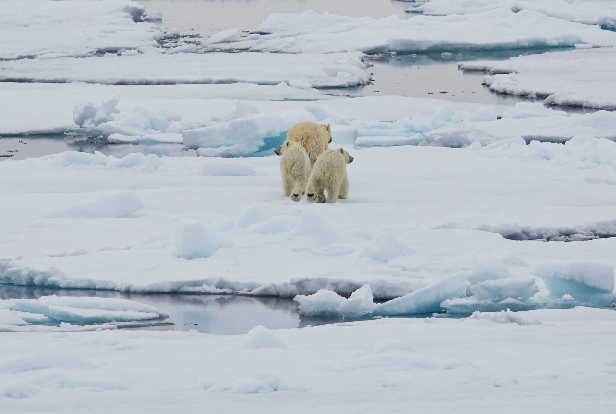 polar - 2.jpeg