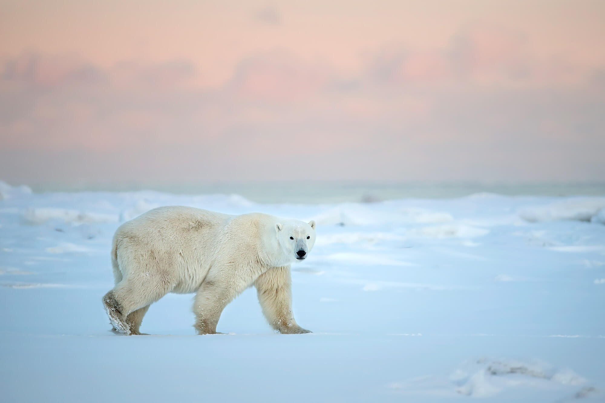 polar - 1.jpg