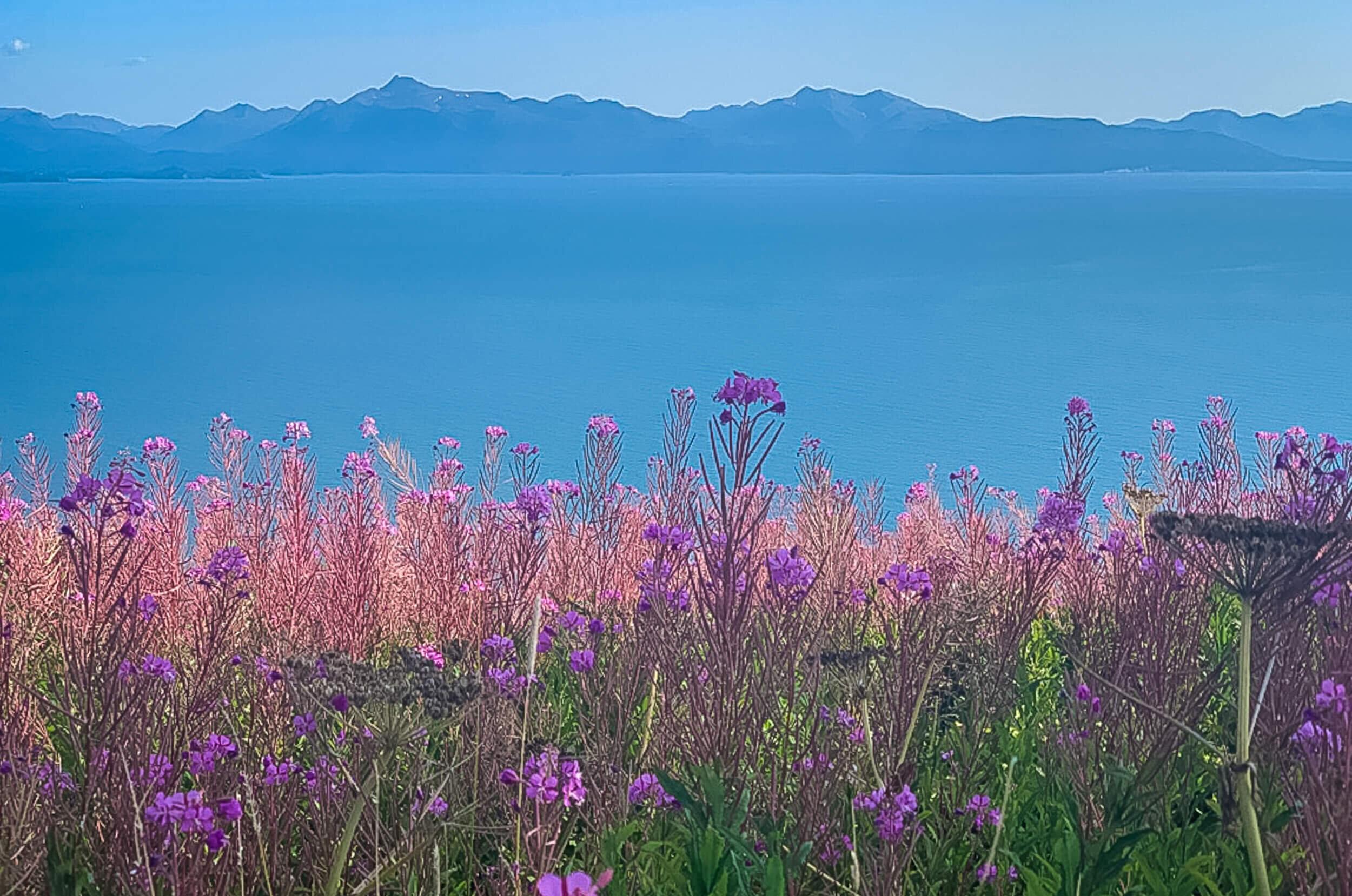 Alaska Trip Report (2 of 23).jpg
