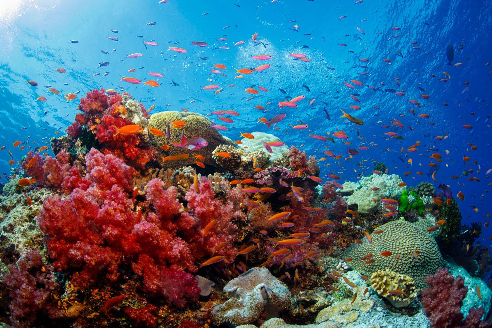 fiji-savusavu-jmc-resort-reef.jpg