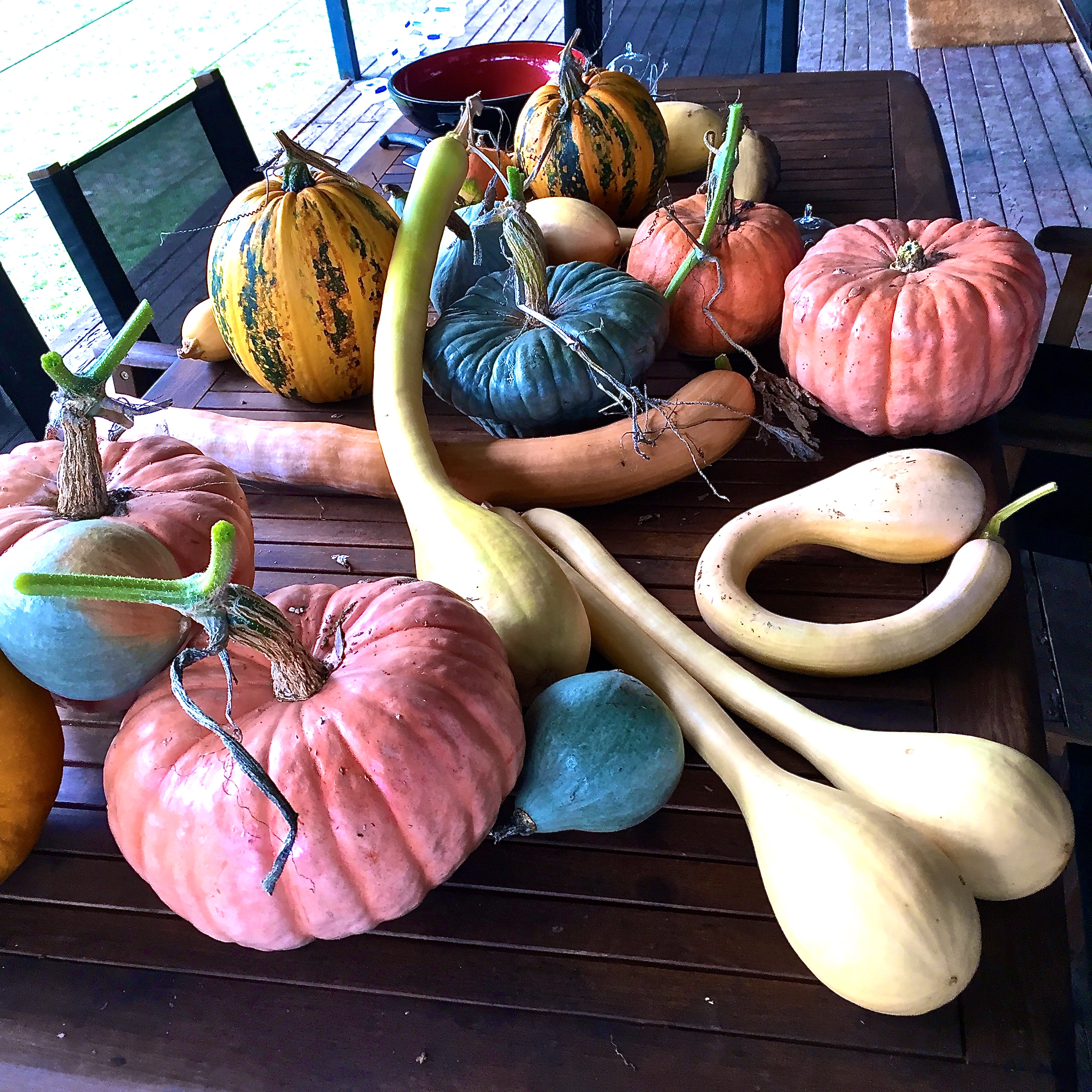 pumpkins galore at the end of summer!