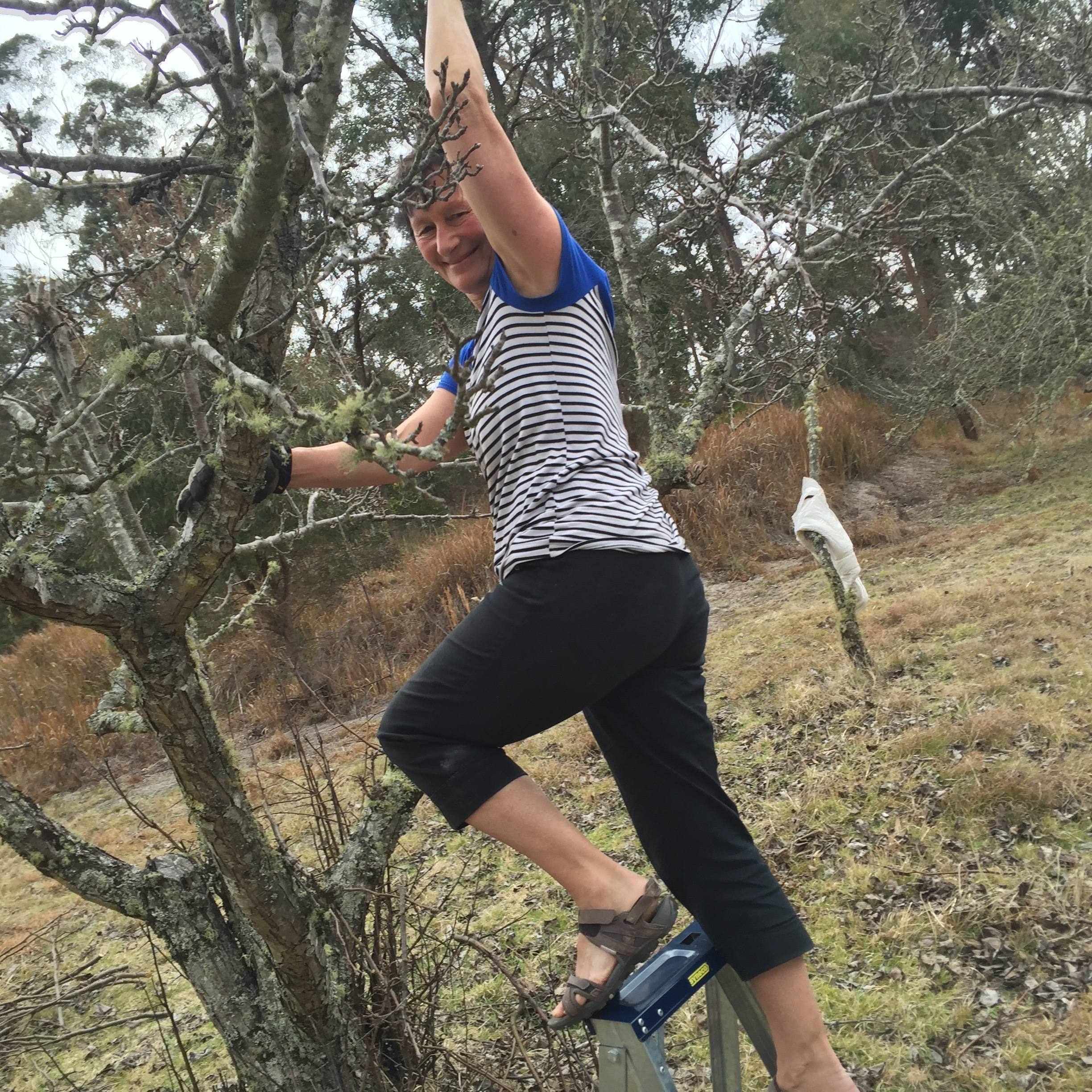 Myriam pruning the nashi pears in the orchard
