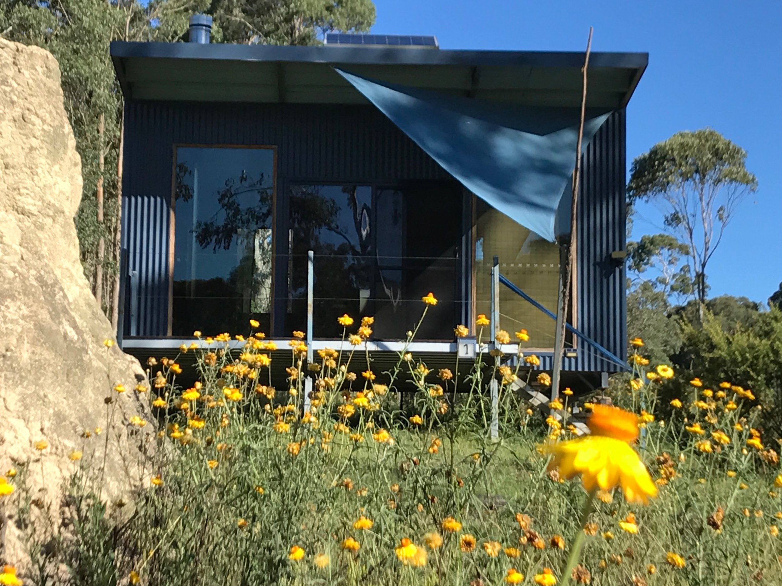 One of our guest studios: surrounded by bright yellow strawflowers in summer!