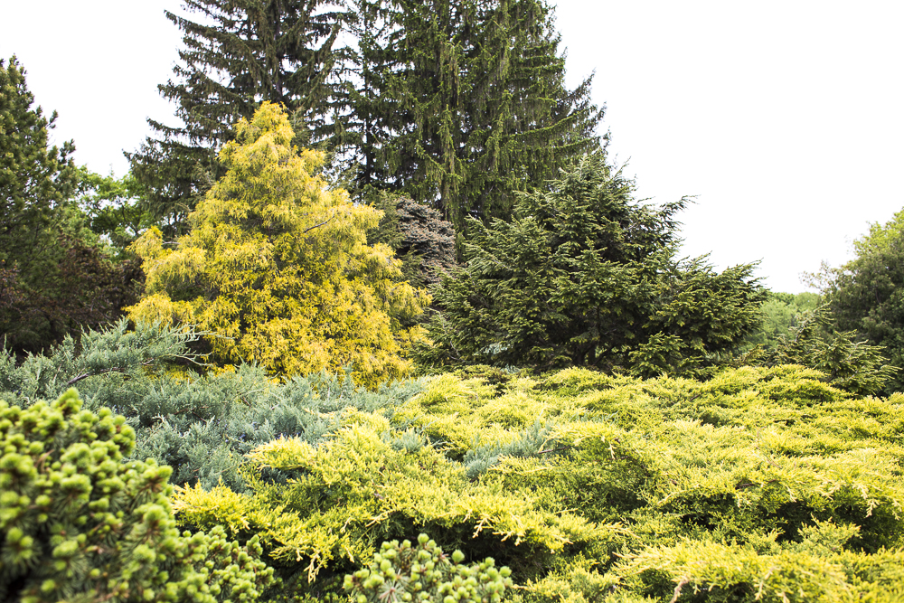 Layers of evergreen trees and shrubs in green, yellow, and teal